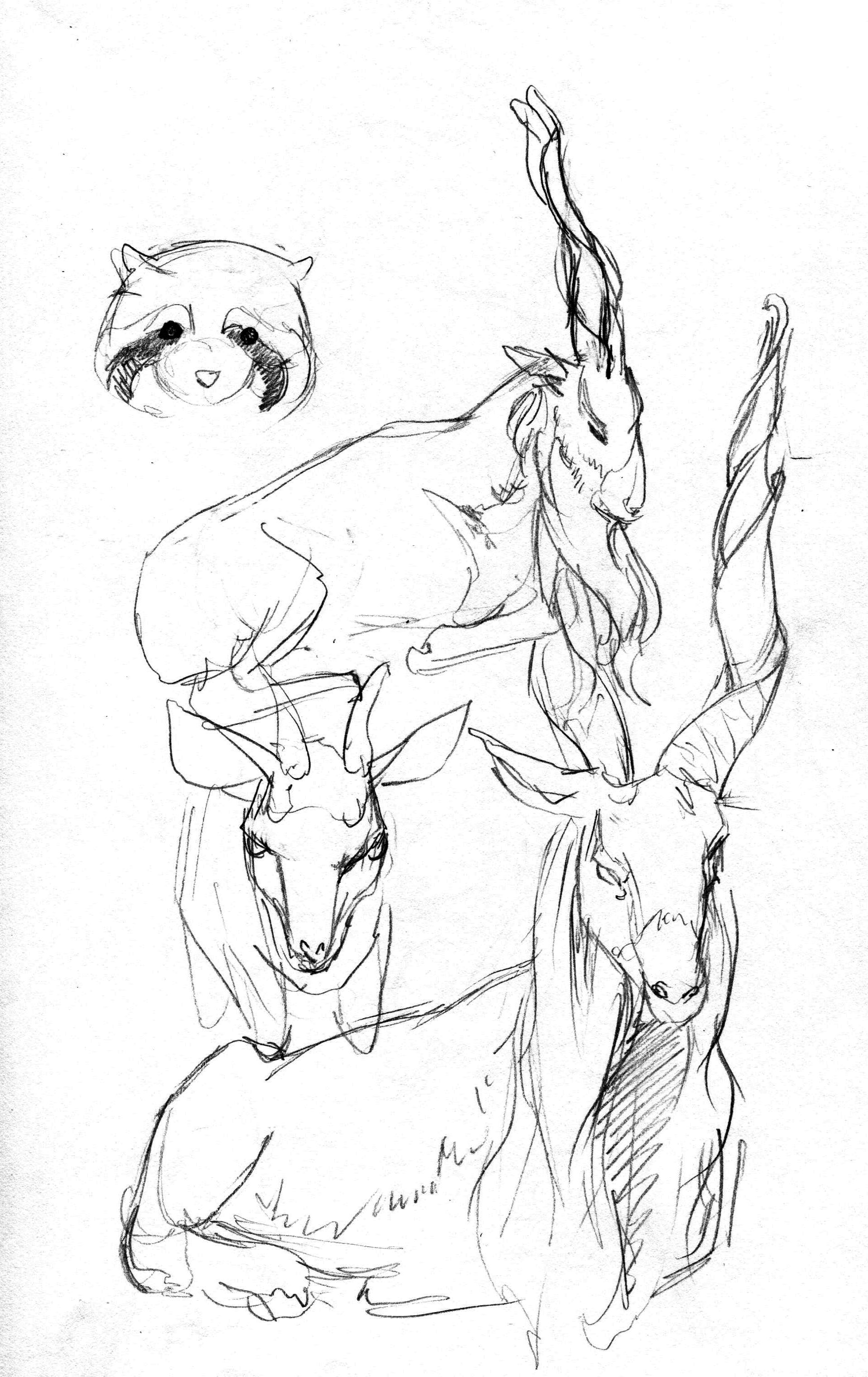 animals004.jpg