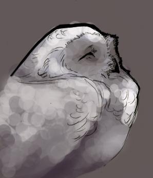 Owl Cheer