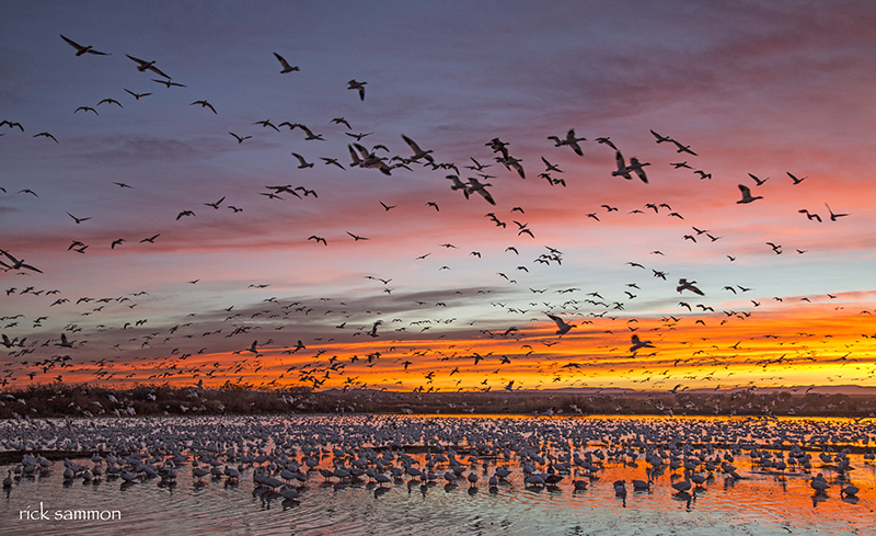 Sammon Sunrise.jpg