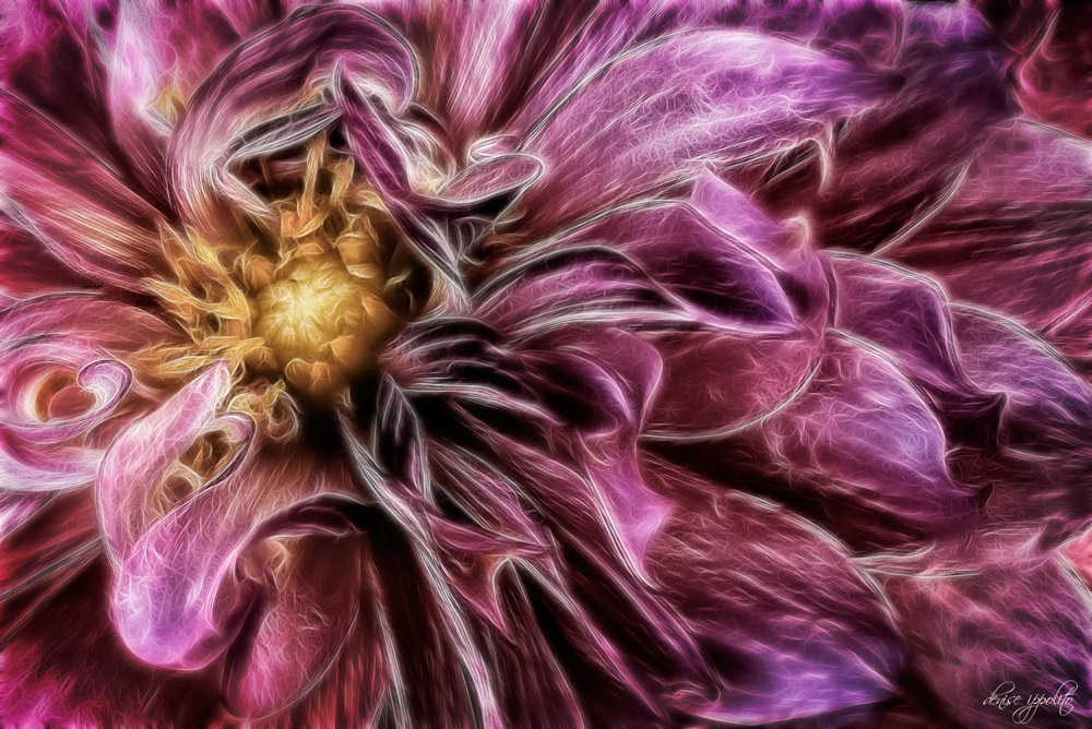 Dahlia with Fractalius Plug-in.jpg