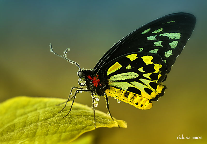 A favorite shot from Butterfly World.