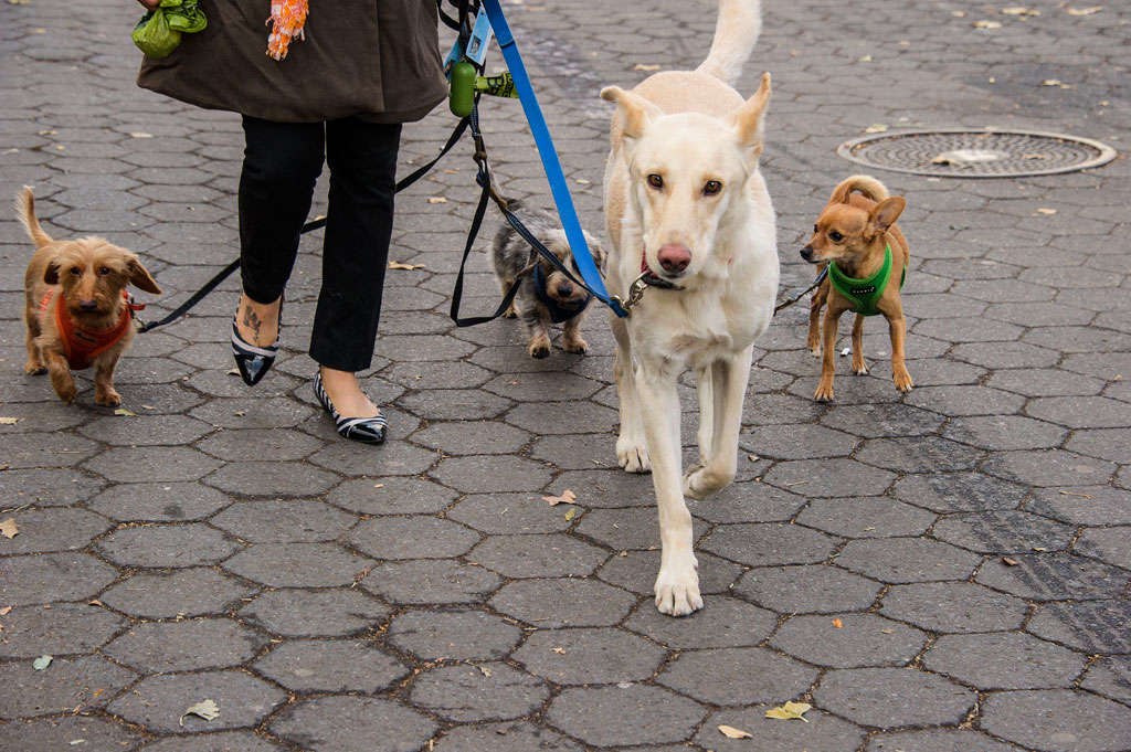 6 Dog_Walker_Eldridge_St.jpg