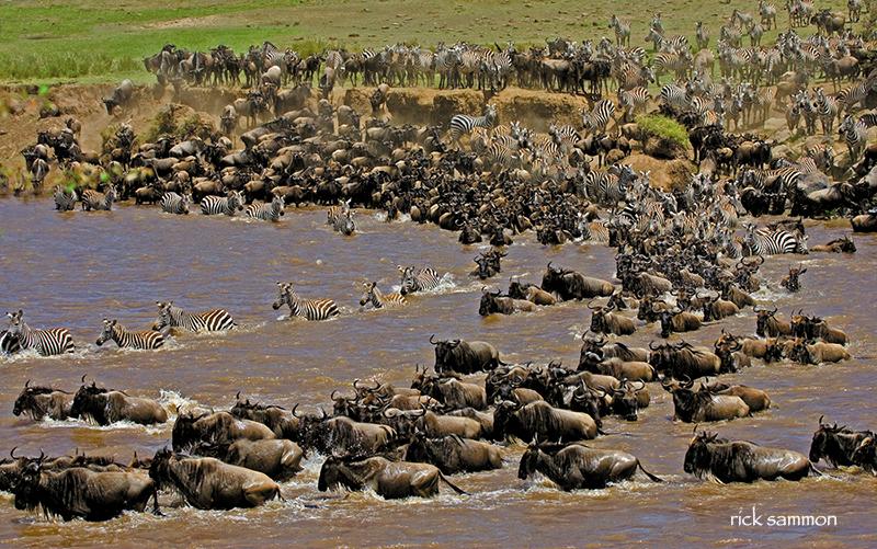 Great migration, Kenya.  Canon 100-400mm IS lens .