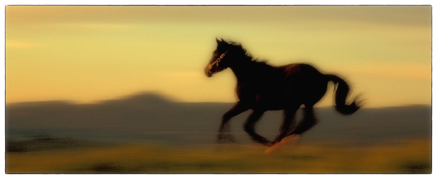 rick sammon running horse G.jpg