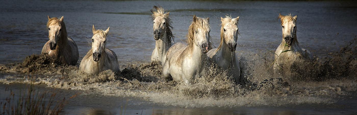 rick sammon camargue horses 7.jpg