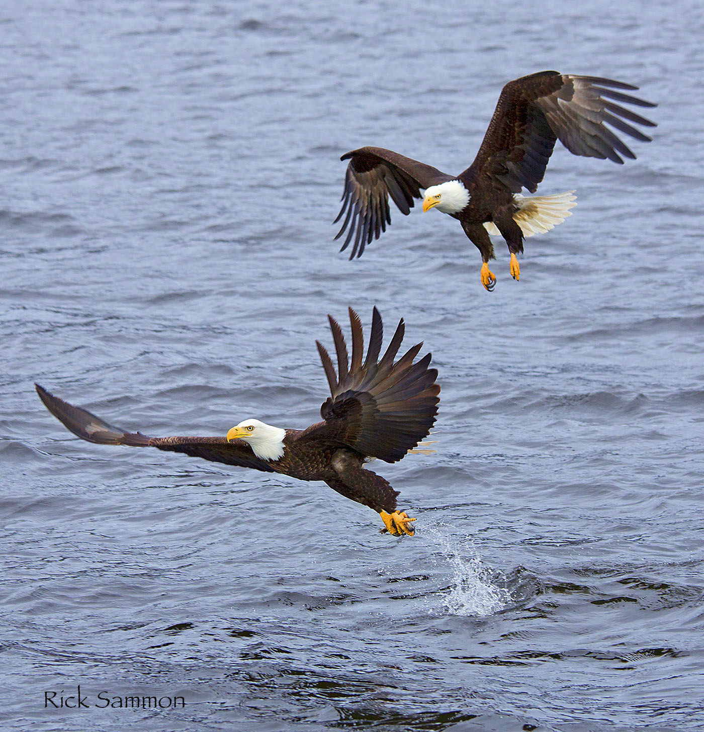 rick sammon eagles.jpg