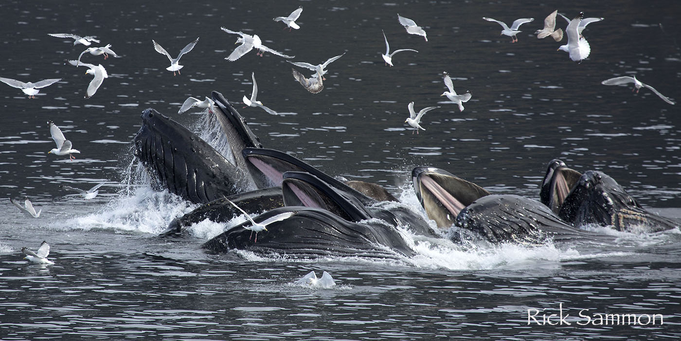 rick sammon whales.jpg