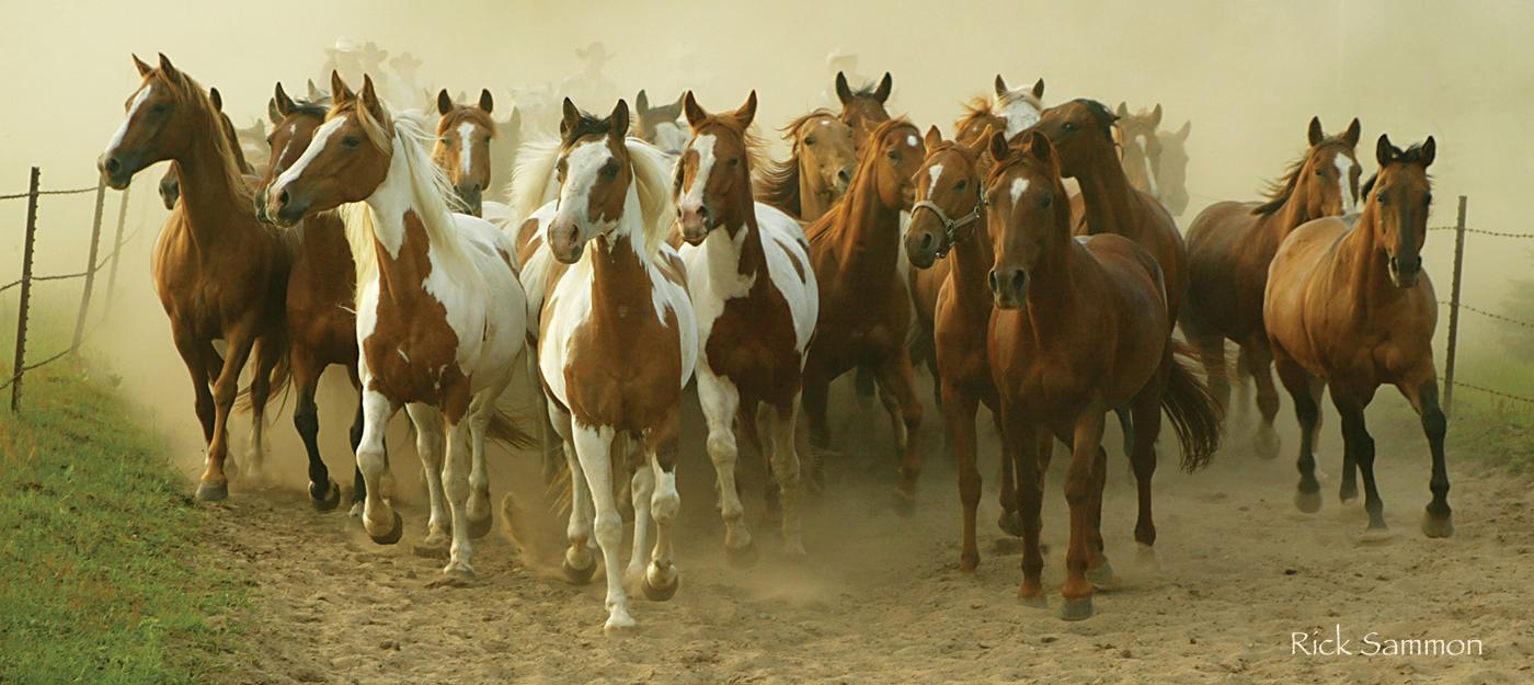 rick sammon horses.jpg
