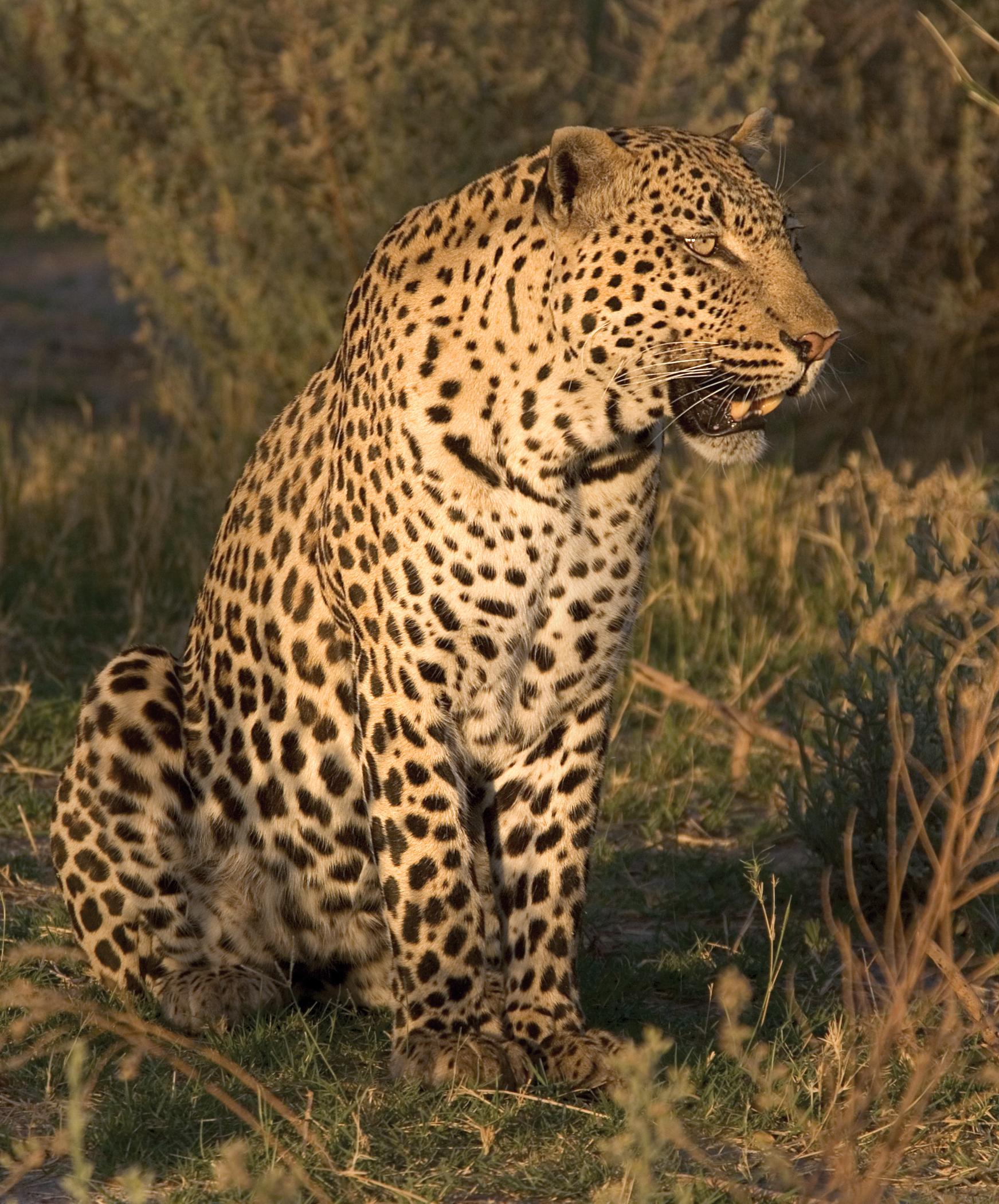 rick sammon botswana 2.jpg