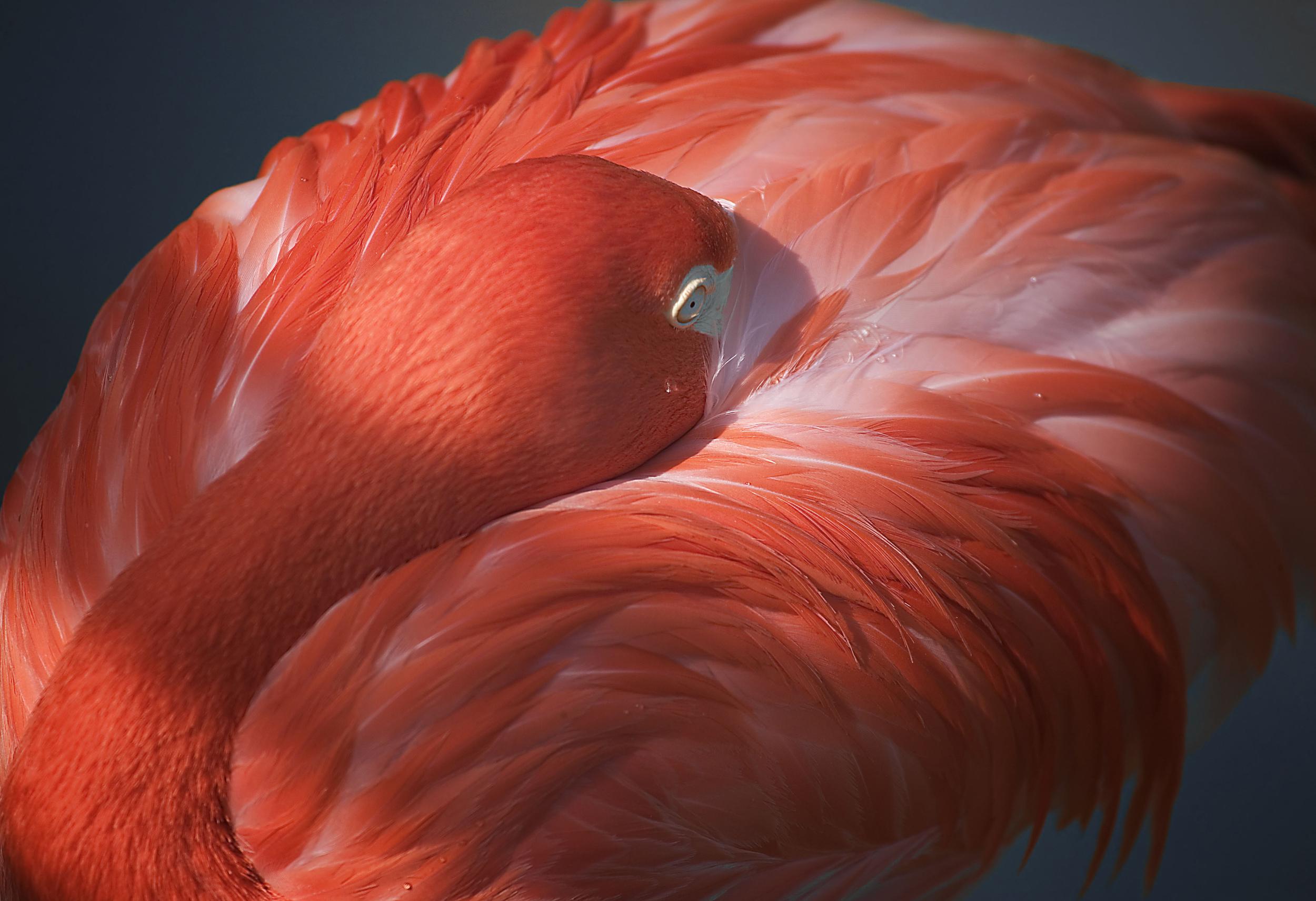 Rick Sammon Birds AAA.jpg