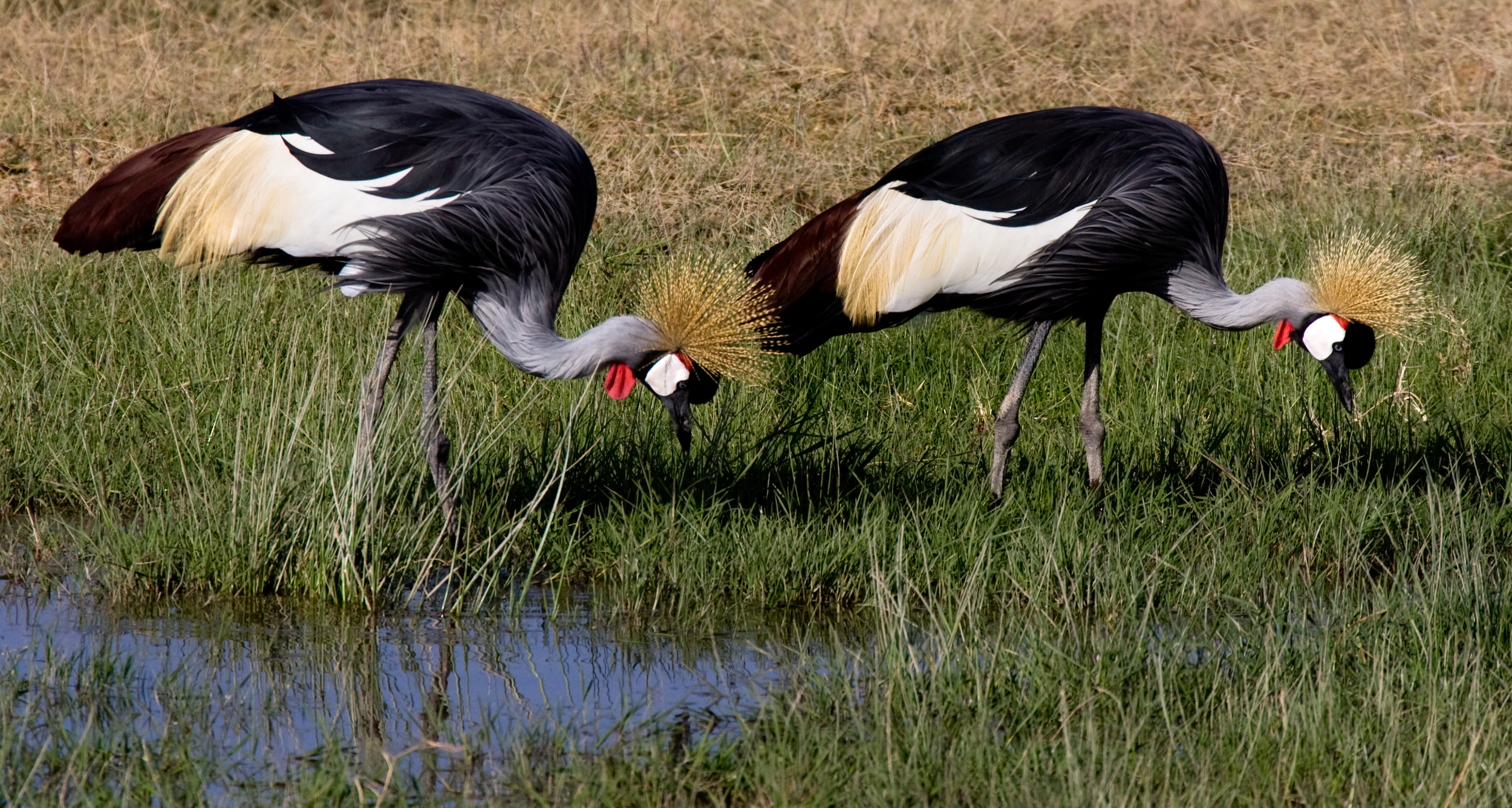 Rick Sammon's Birds003.jpg