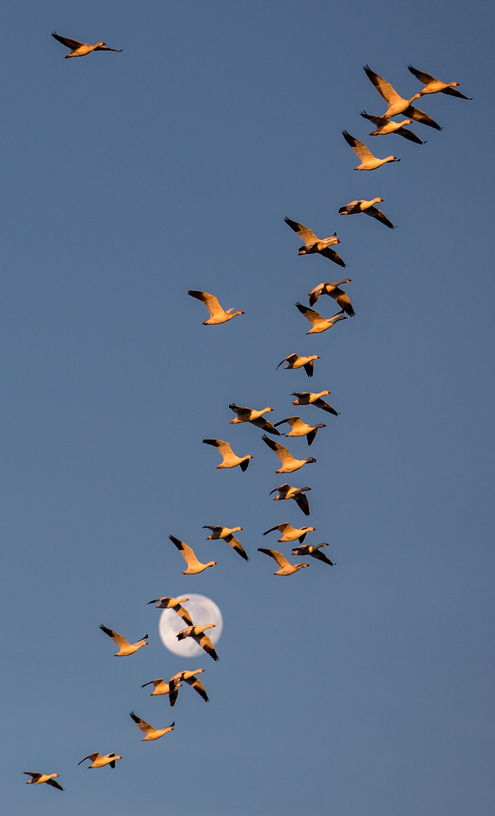 Rick Sammon's Birds006.jpg