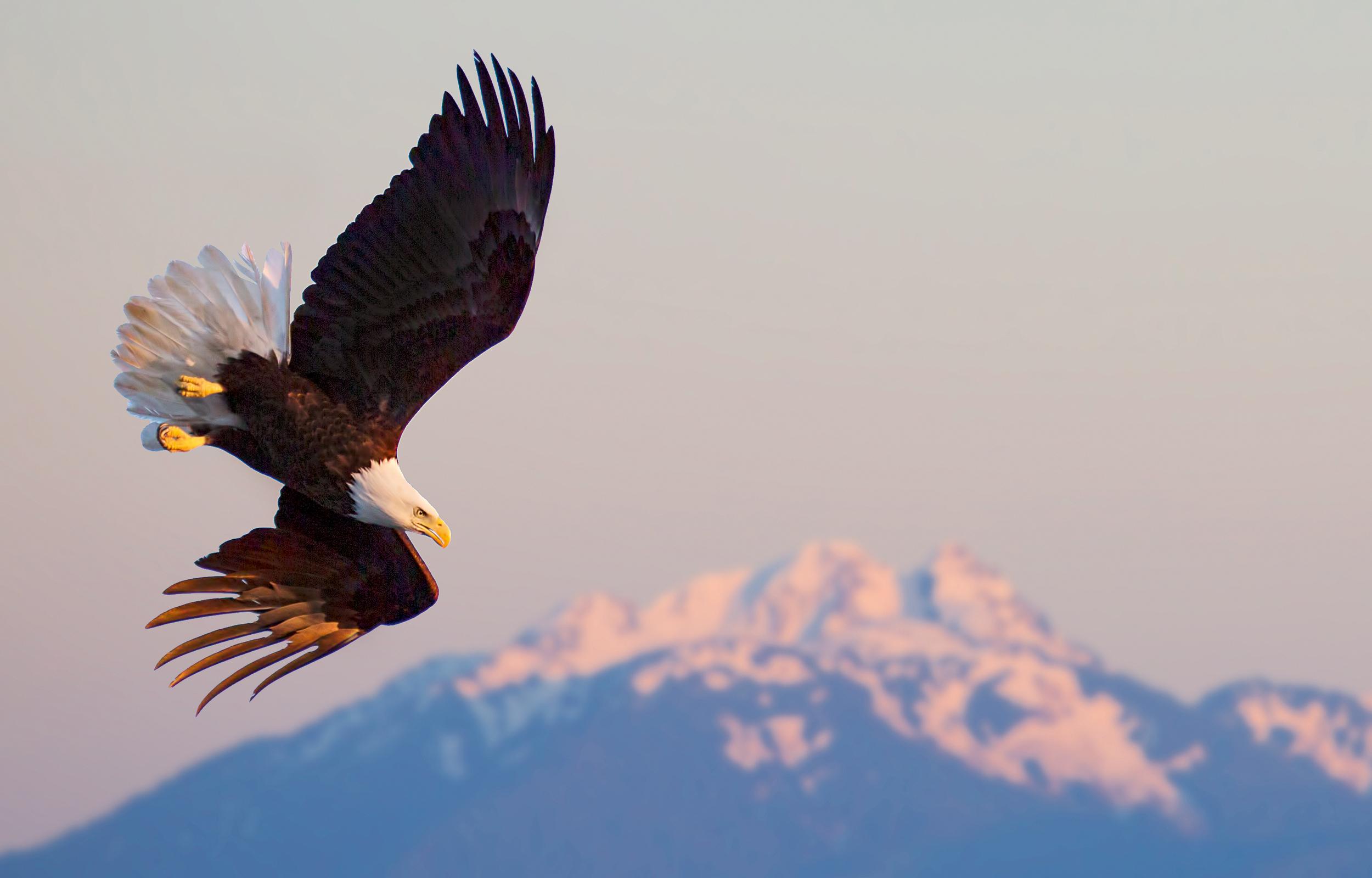Rick Sammon's Birds008.jpg