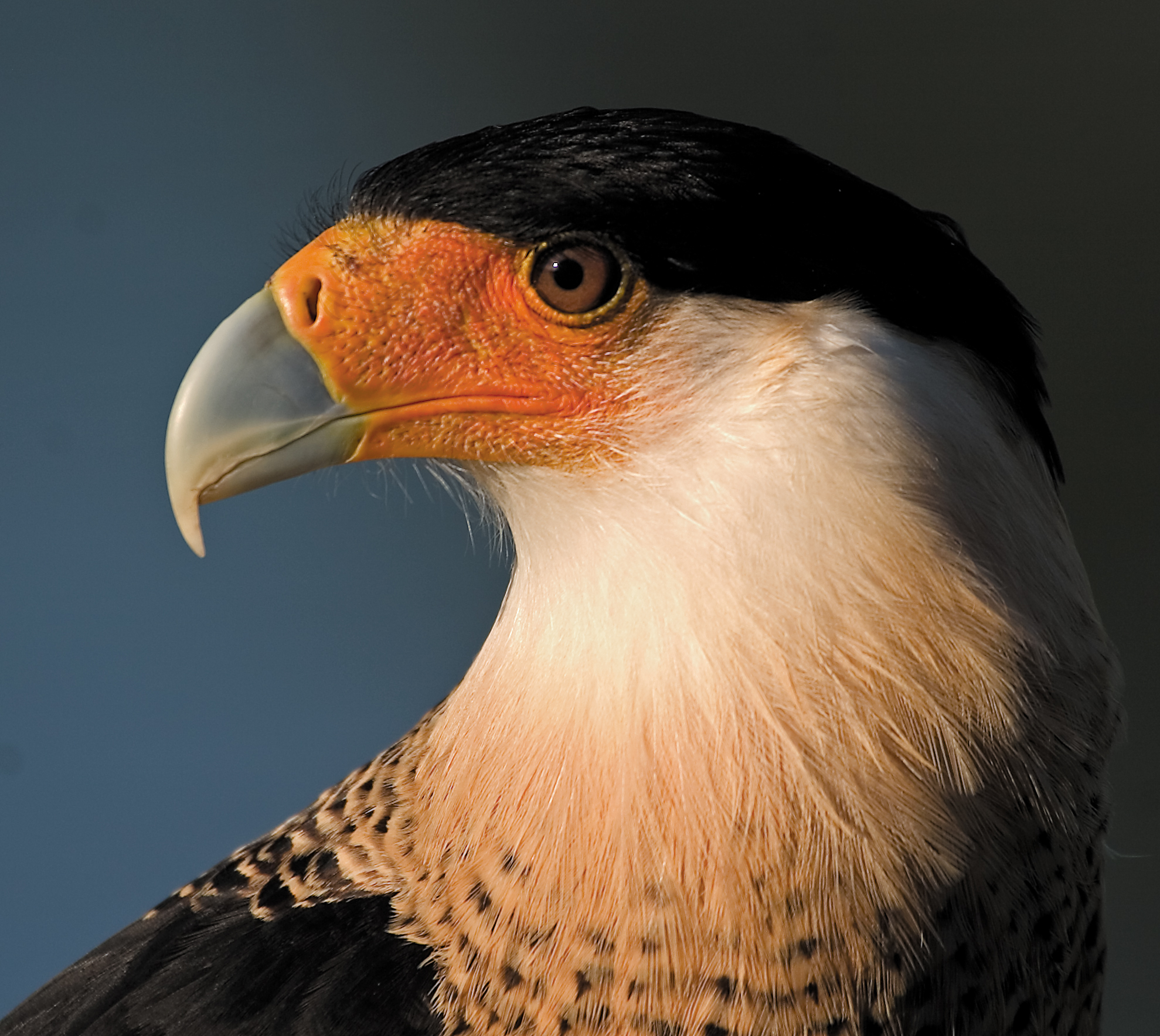 Rick Sammon's Birds010.jpg