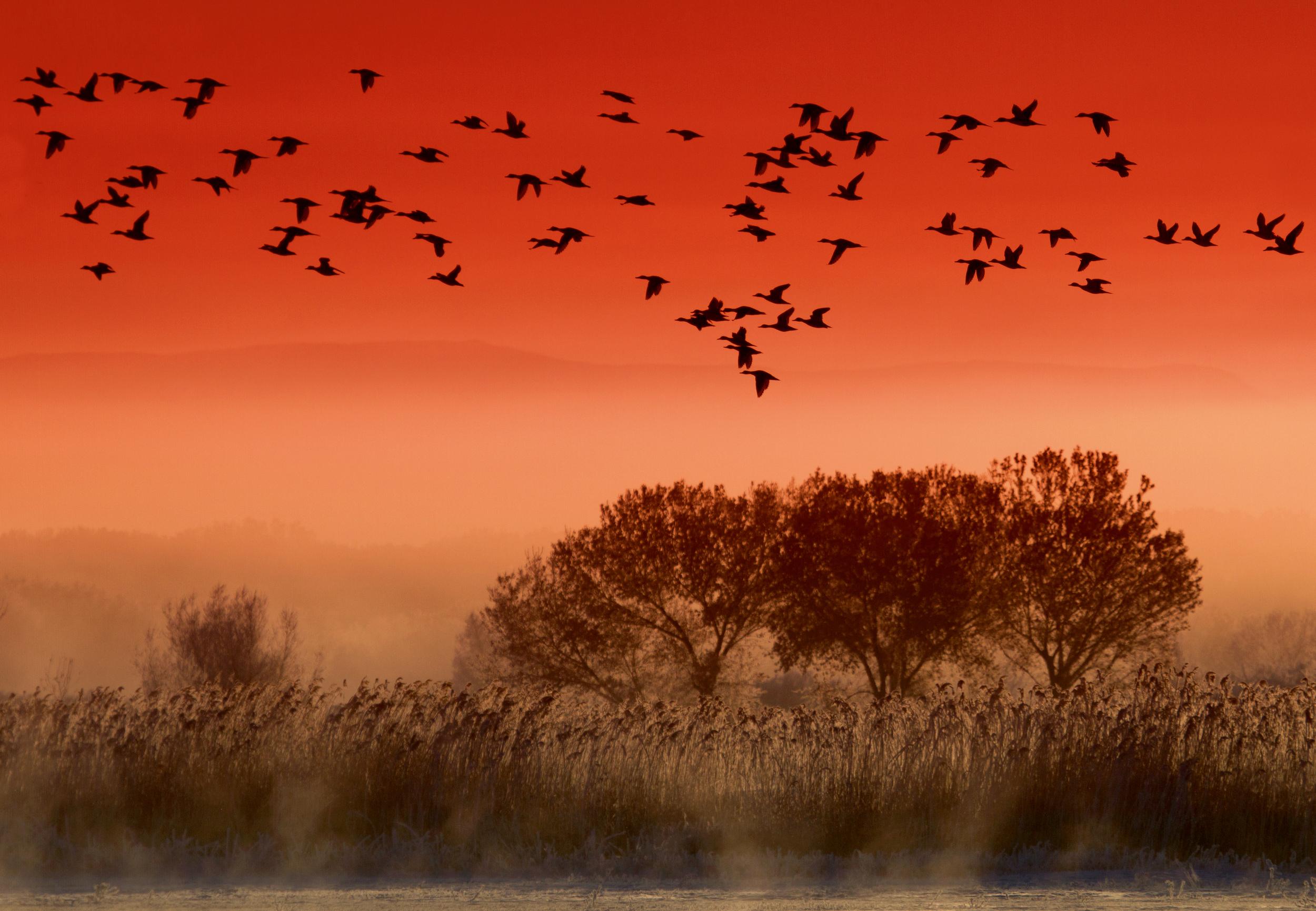 Rick Sammon's Birds011.jpg