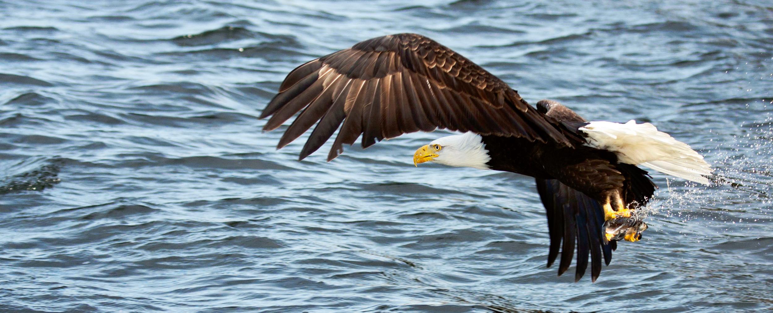 Rick Sammon's Birds013.jpg