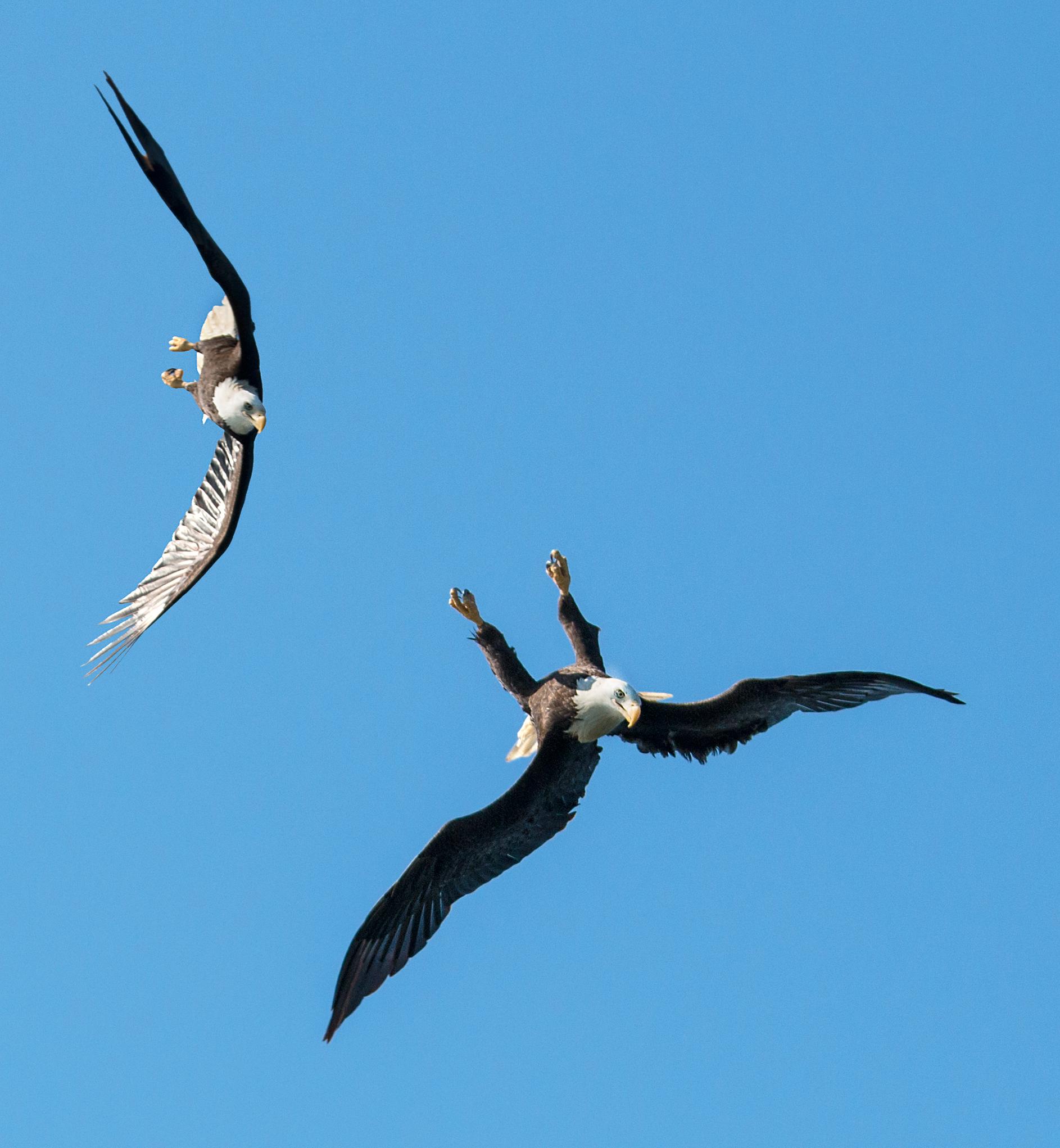 Rick Sammon's Birds014.jpg