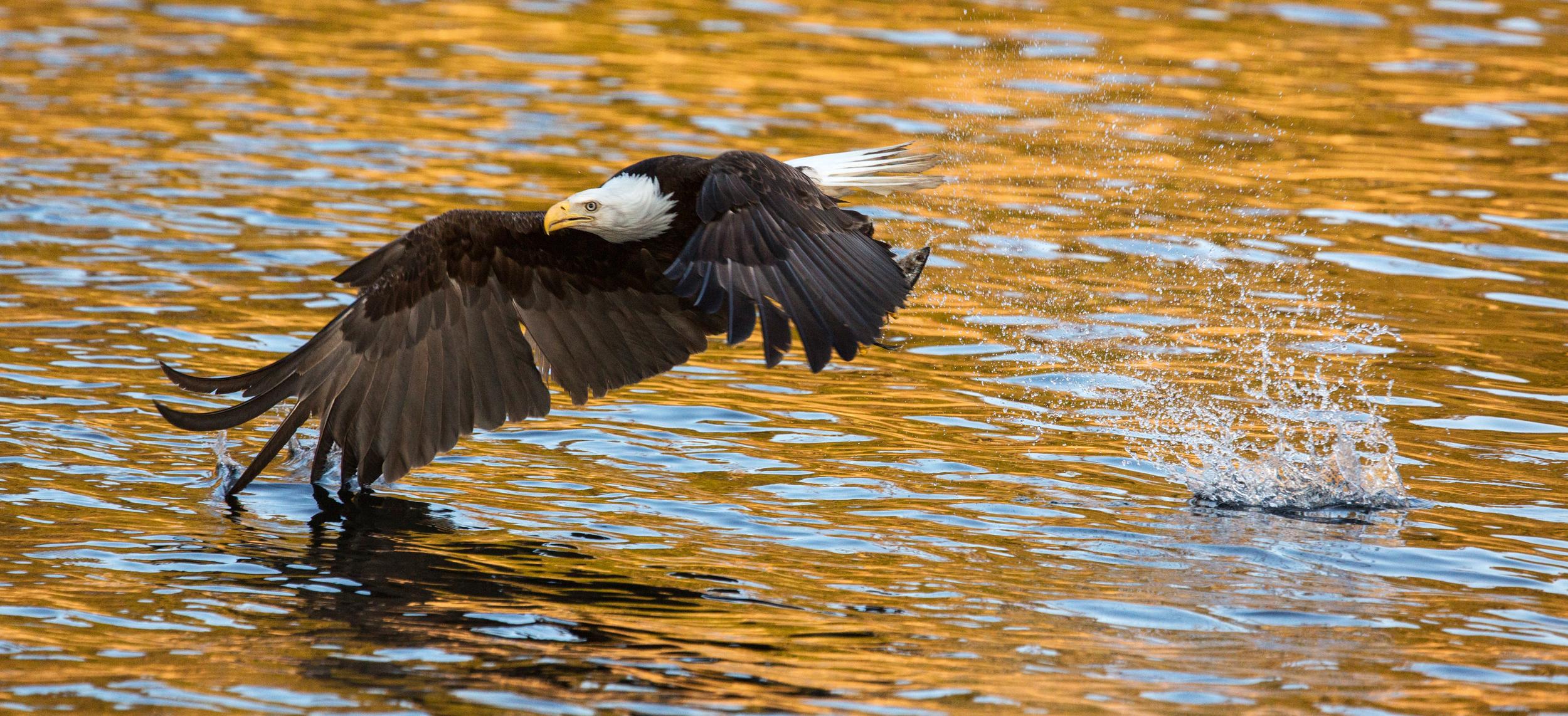 Rick Sammon's Birds012.jpg