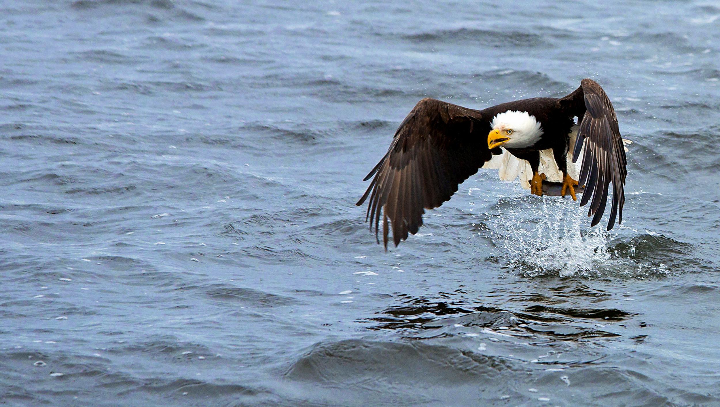 Rick Sammon's Birds016.jpg