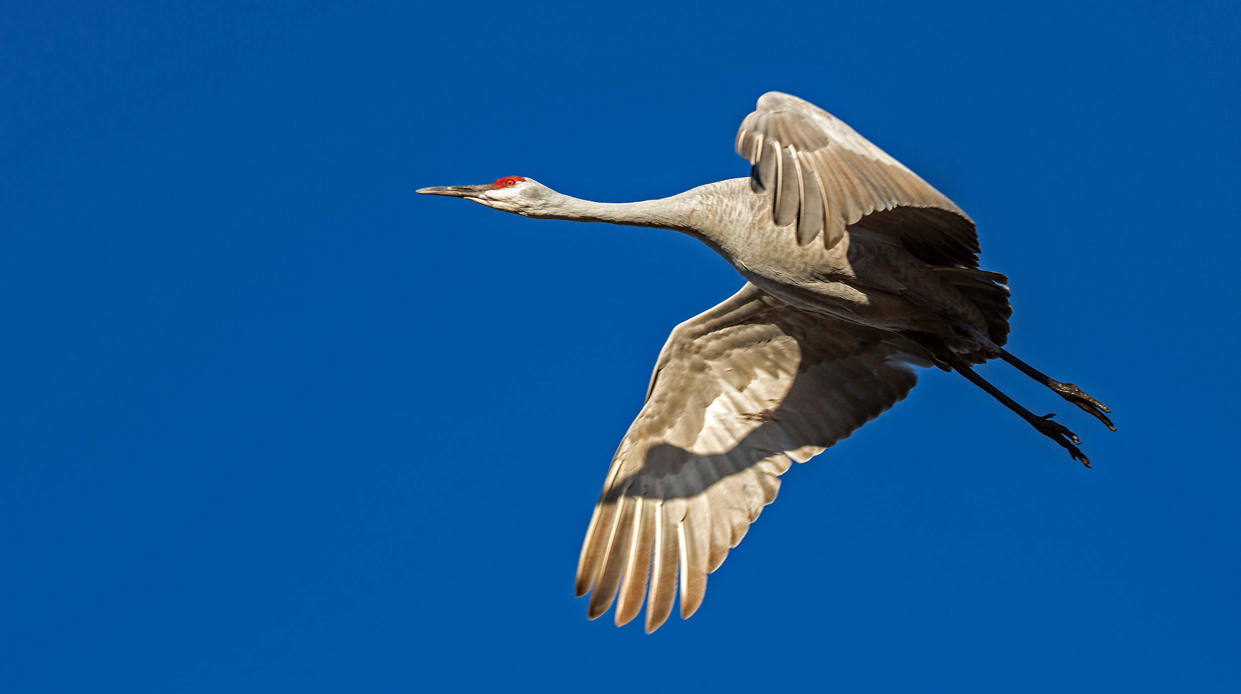Rick Sammon's Birds015.jpg
