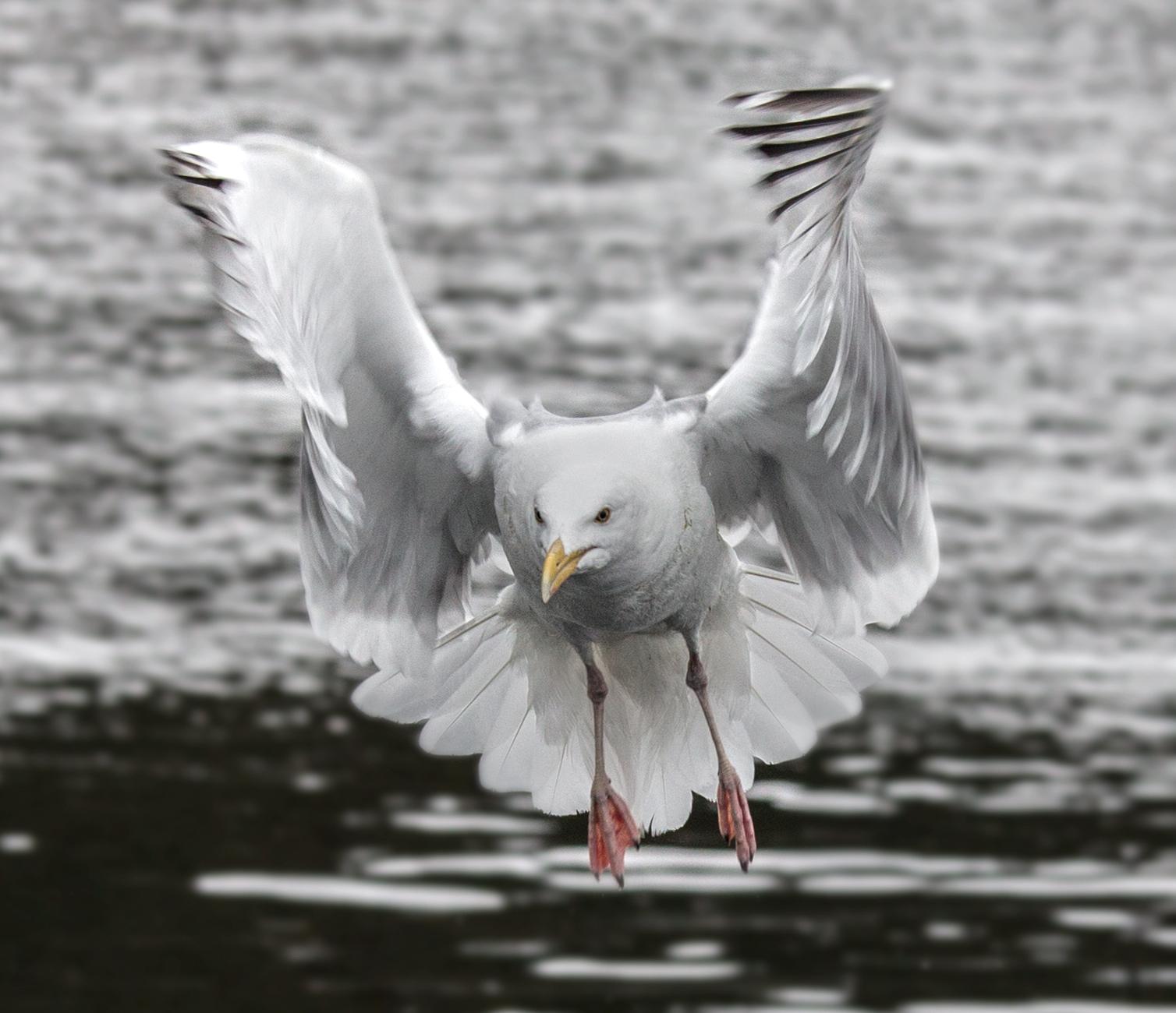 Rick Sammon's Birds018.jpg