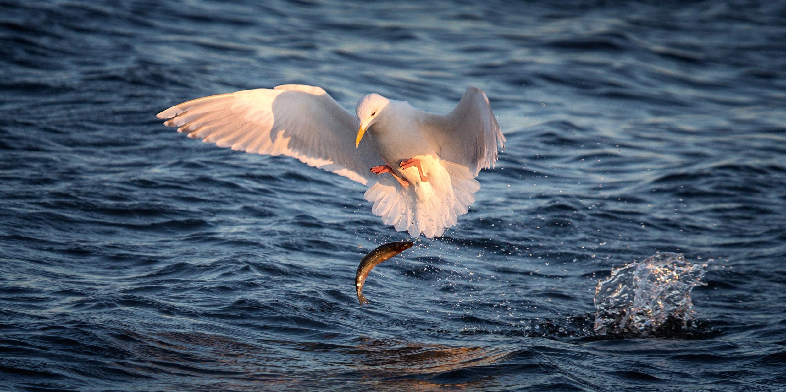Rick Sammon's Birds017.jpg