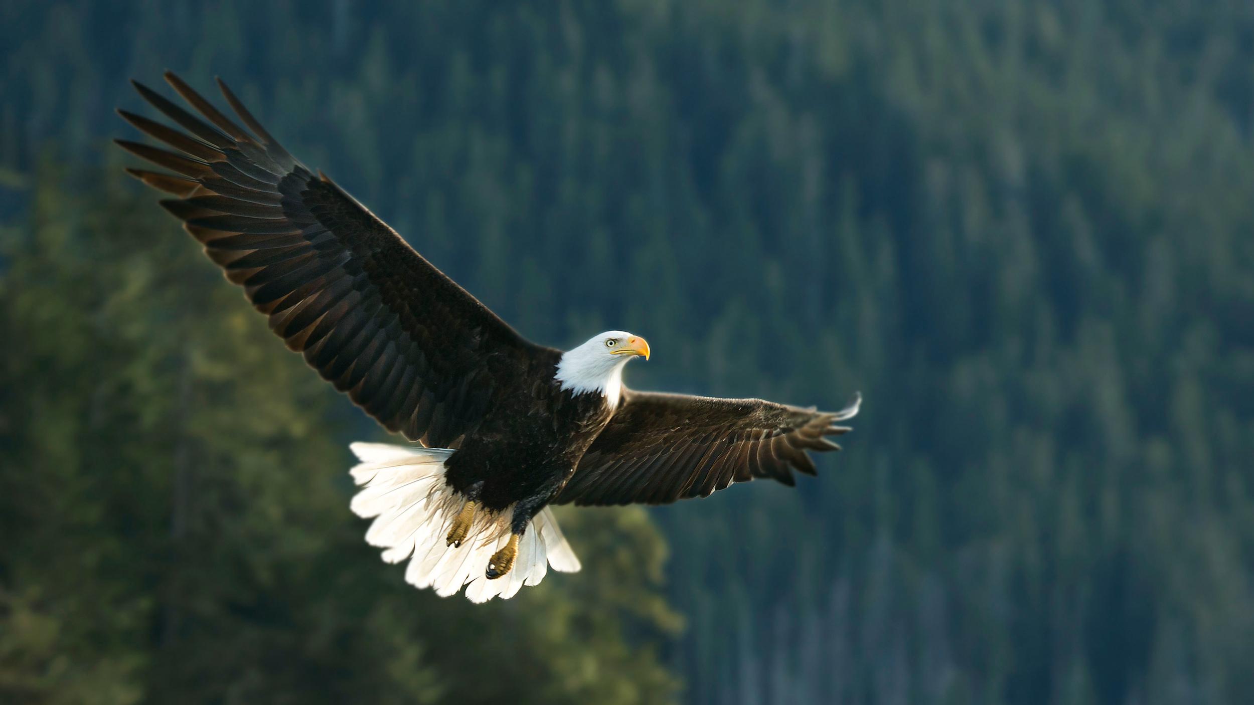 Rick Sammon's Birds019.jpg