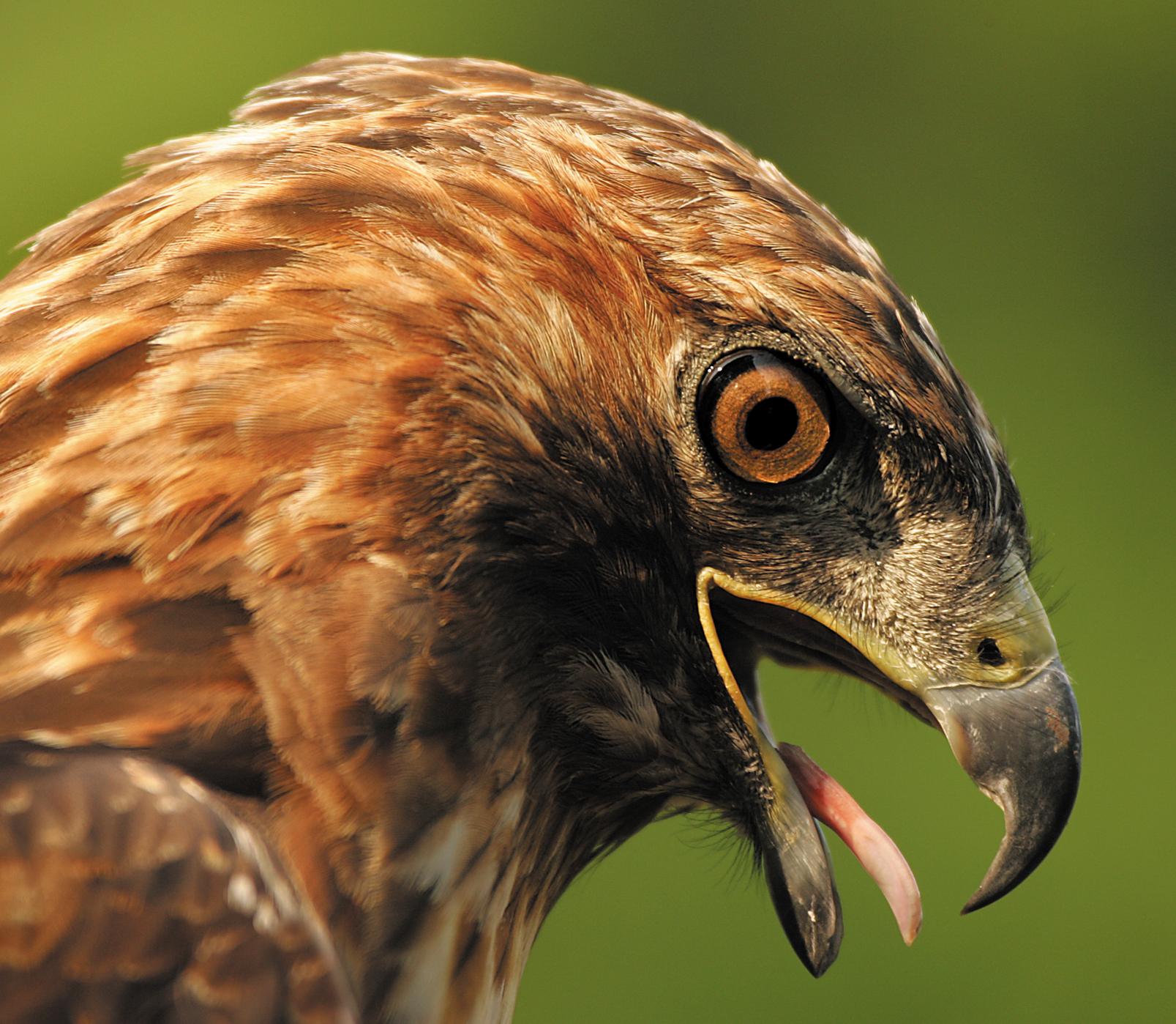 Rick Sammon's Birds021.jpg
