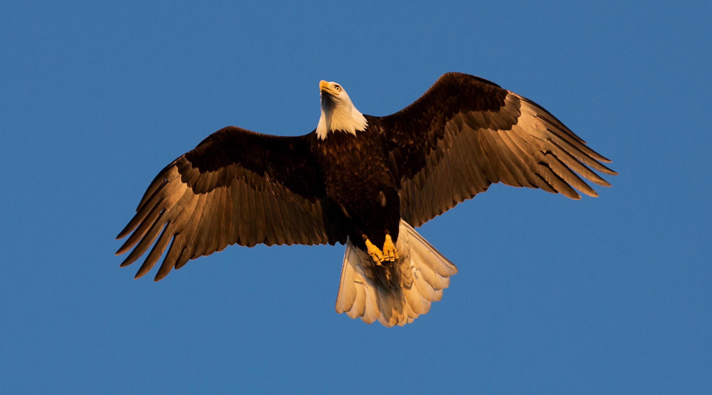 Rick Sammon's Birds027.jpg