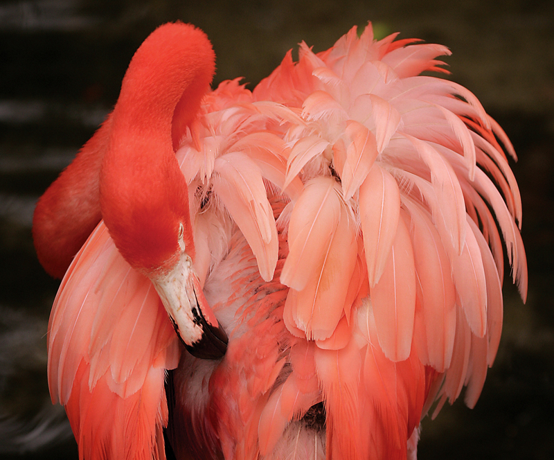 Rick Sammon's Birds029.jpg