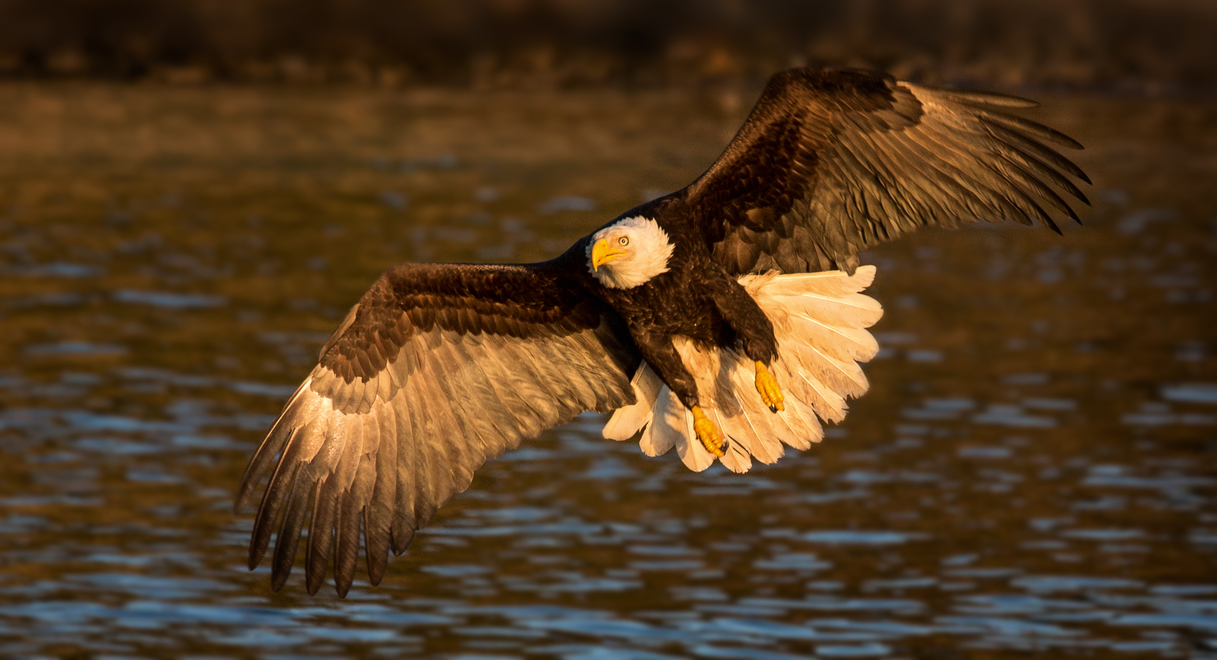 Rick Sammon's Birds030.jpg