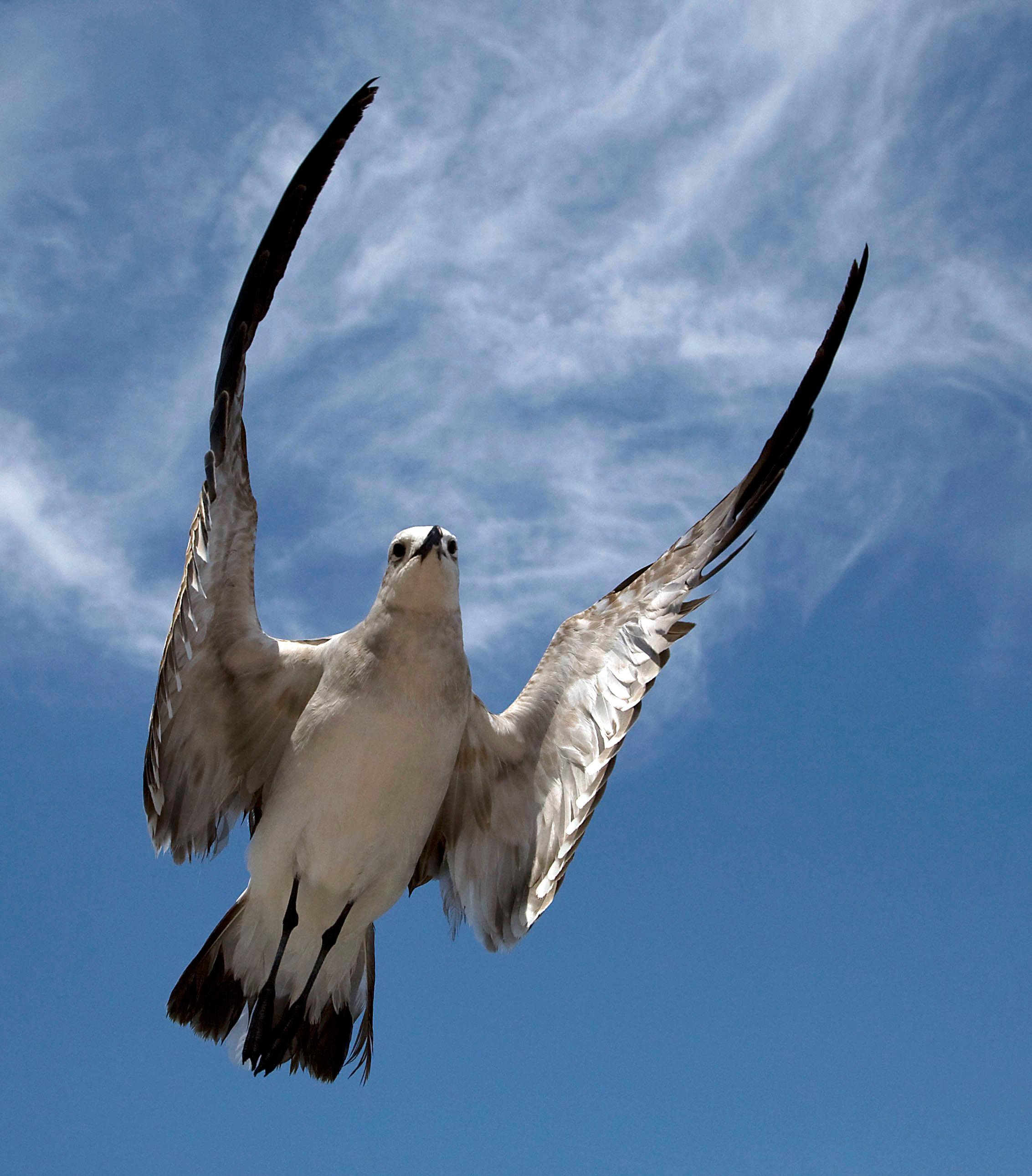 Rick Sammon's Birds031.jpg