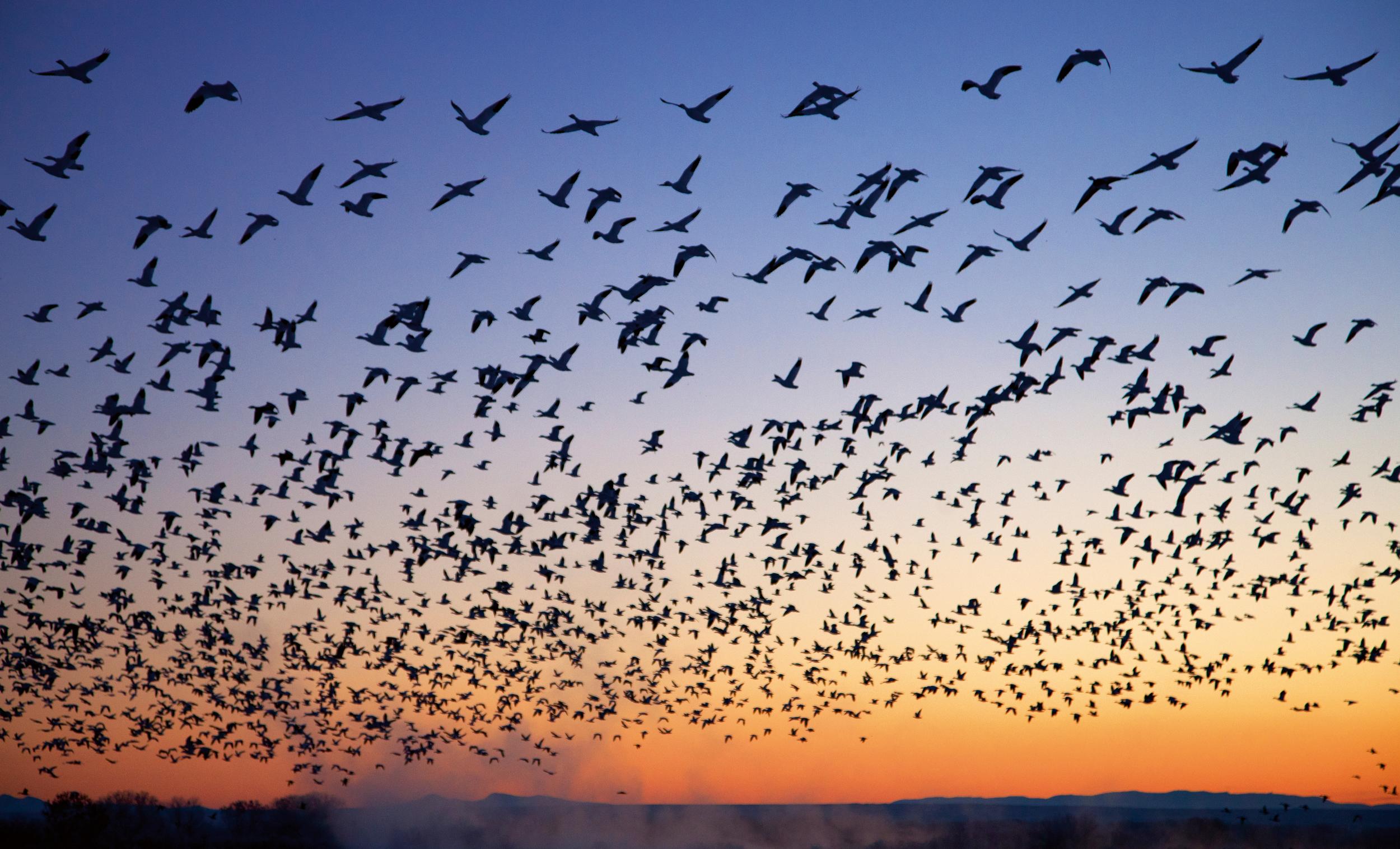 Rick Sammon's Birds026.jpg
