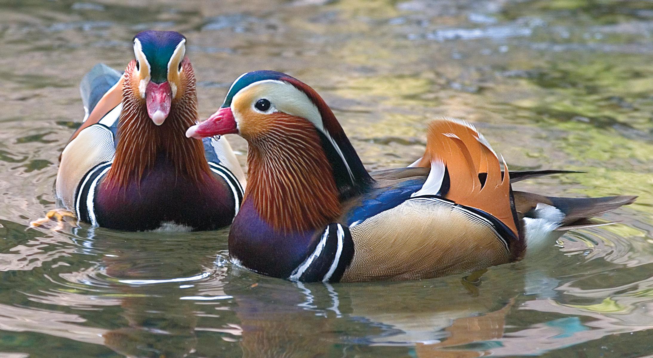 Rick Sammon's Birds033.jpg