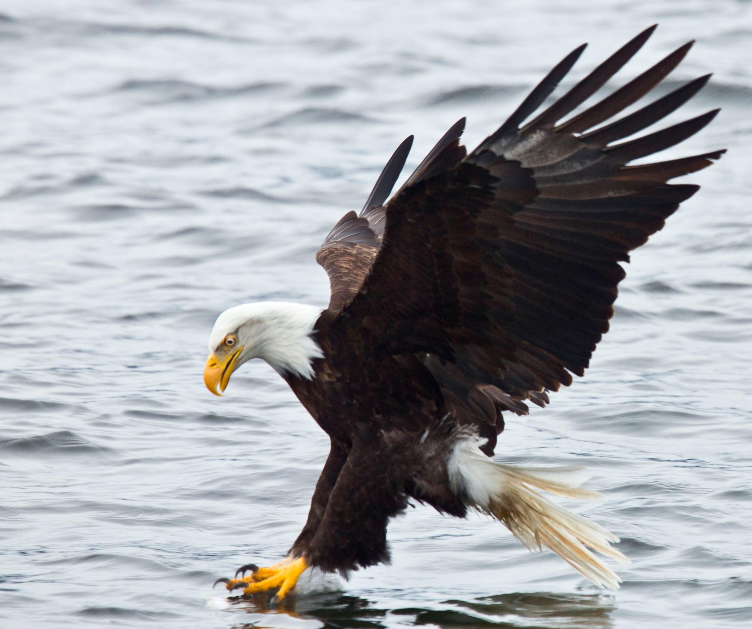 Rick Sammon's Birds036.jpg