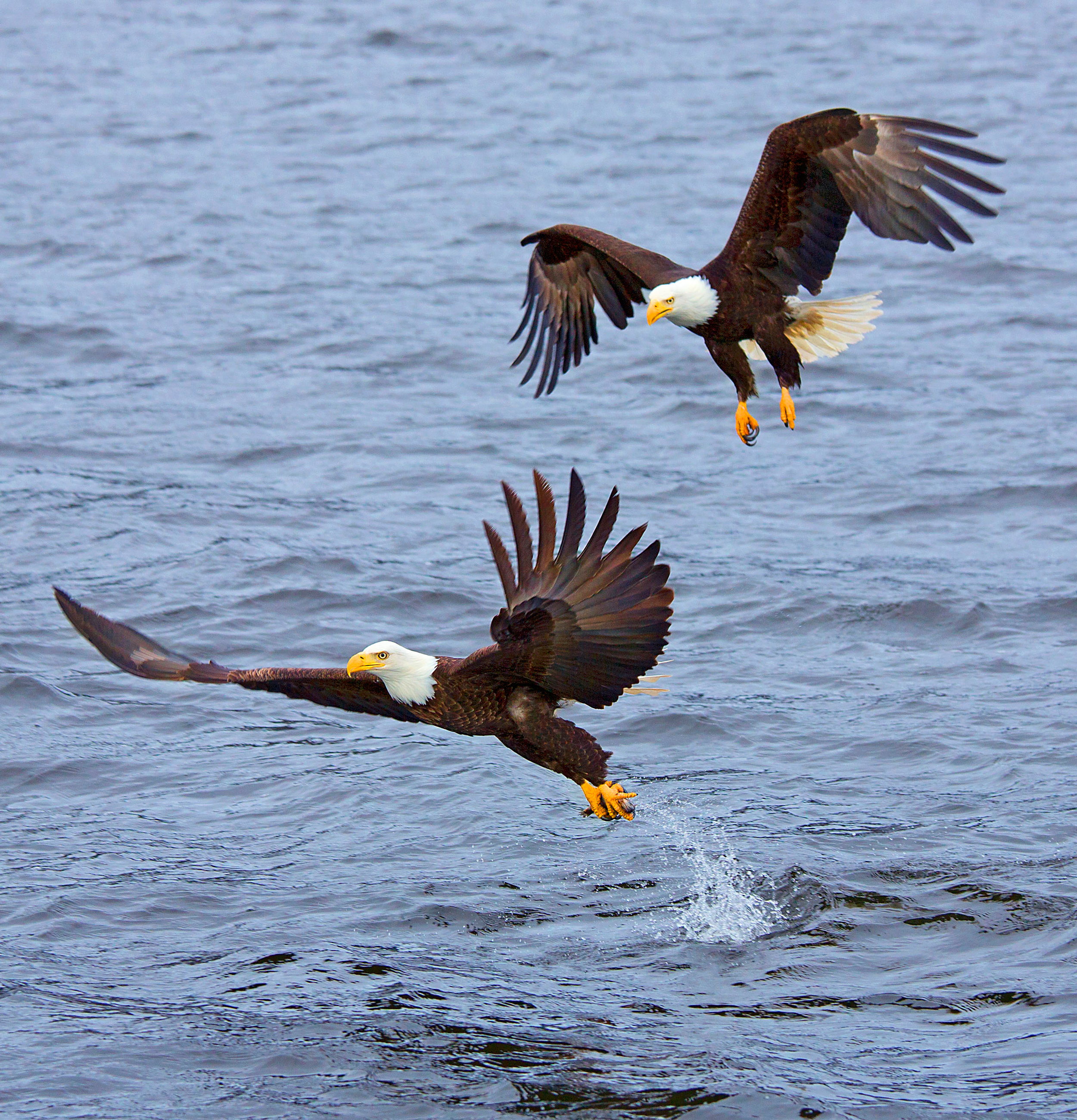 Rick Sammon's Birds035.jpg