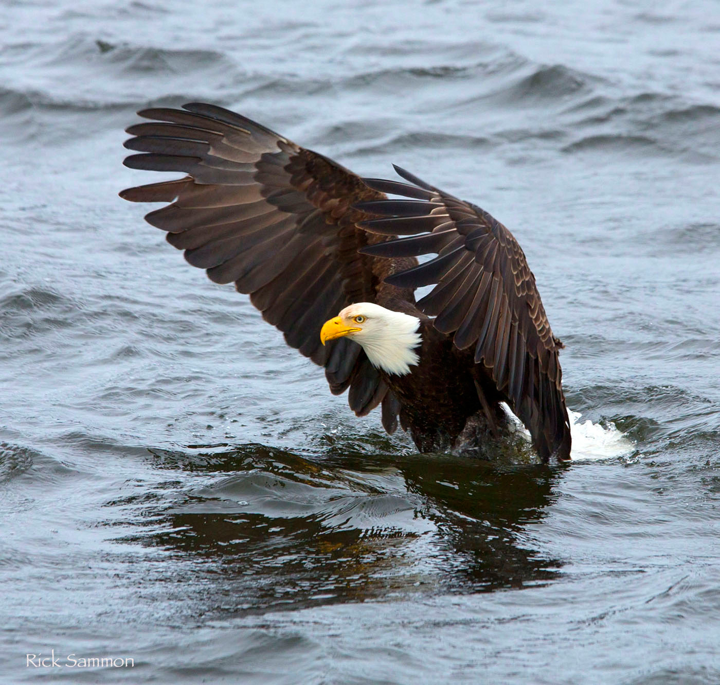 Rick Sammon's Birds040.jpg