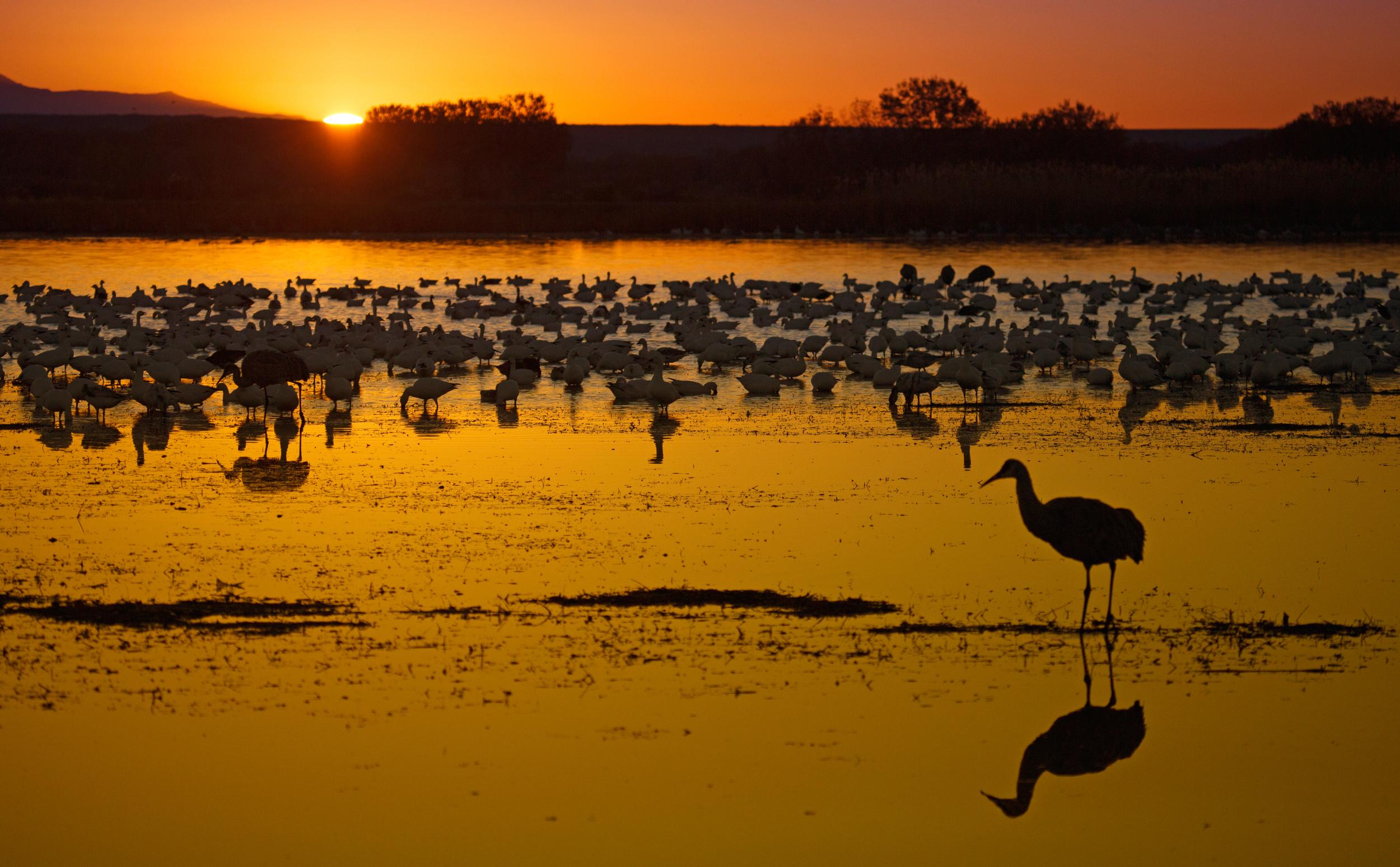 Rick Sammon's Birds044.jpg