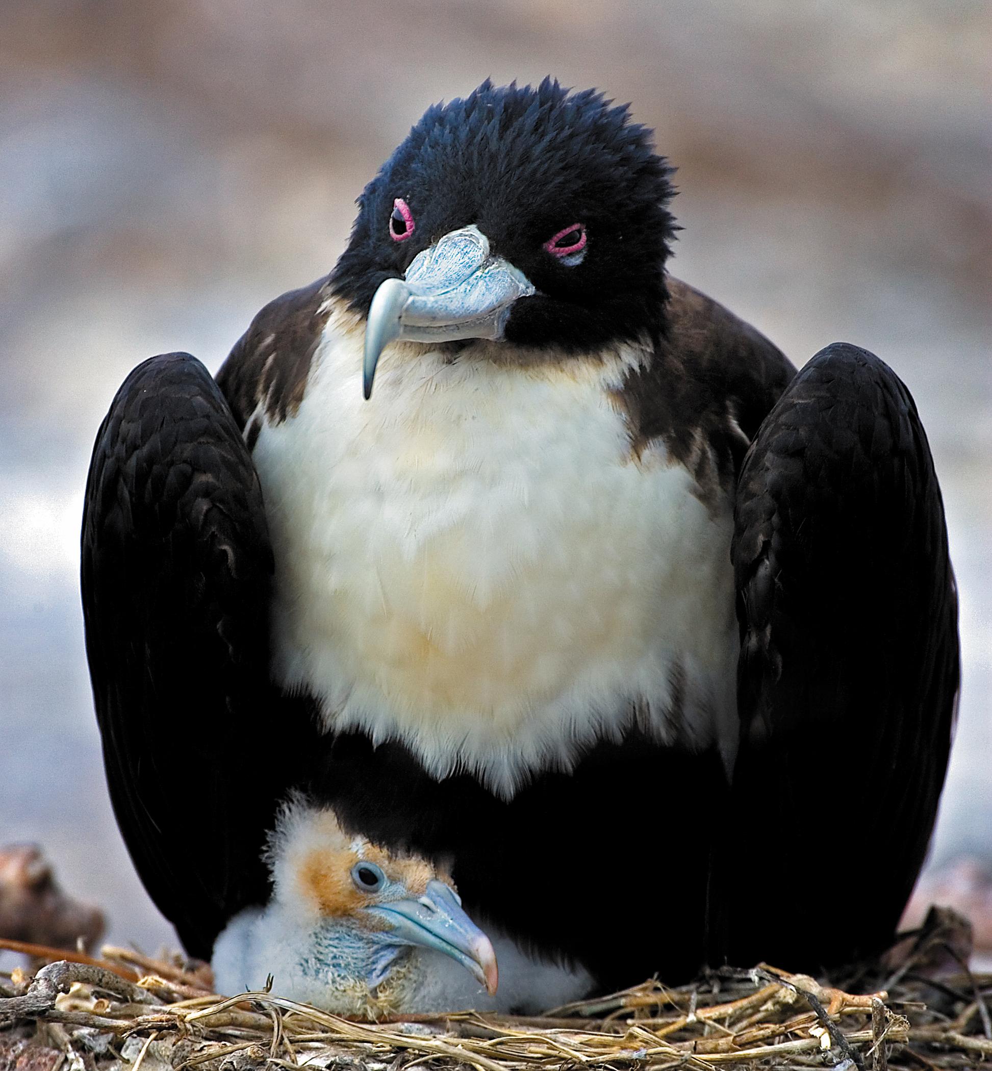 Rick Sammon's Birds022.jpg