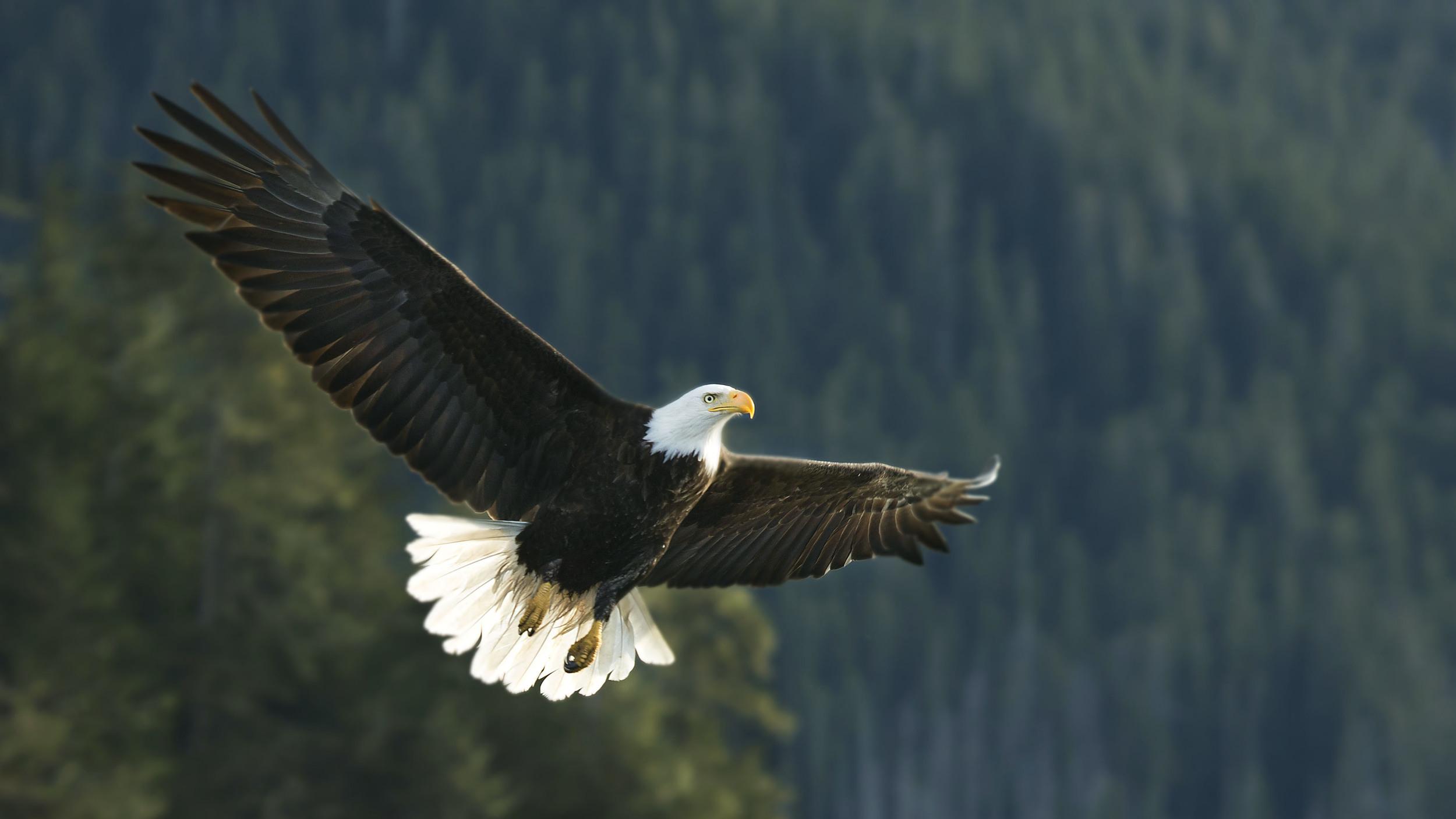 Rick Sammon's Birds 099.jpg