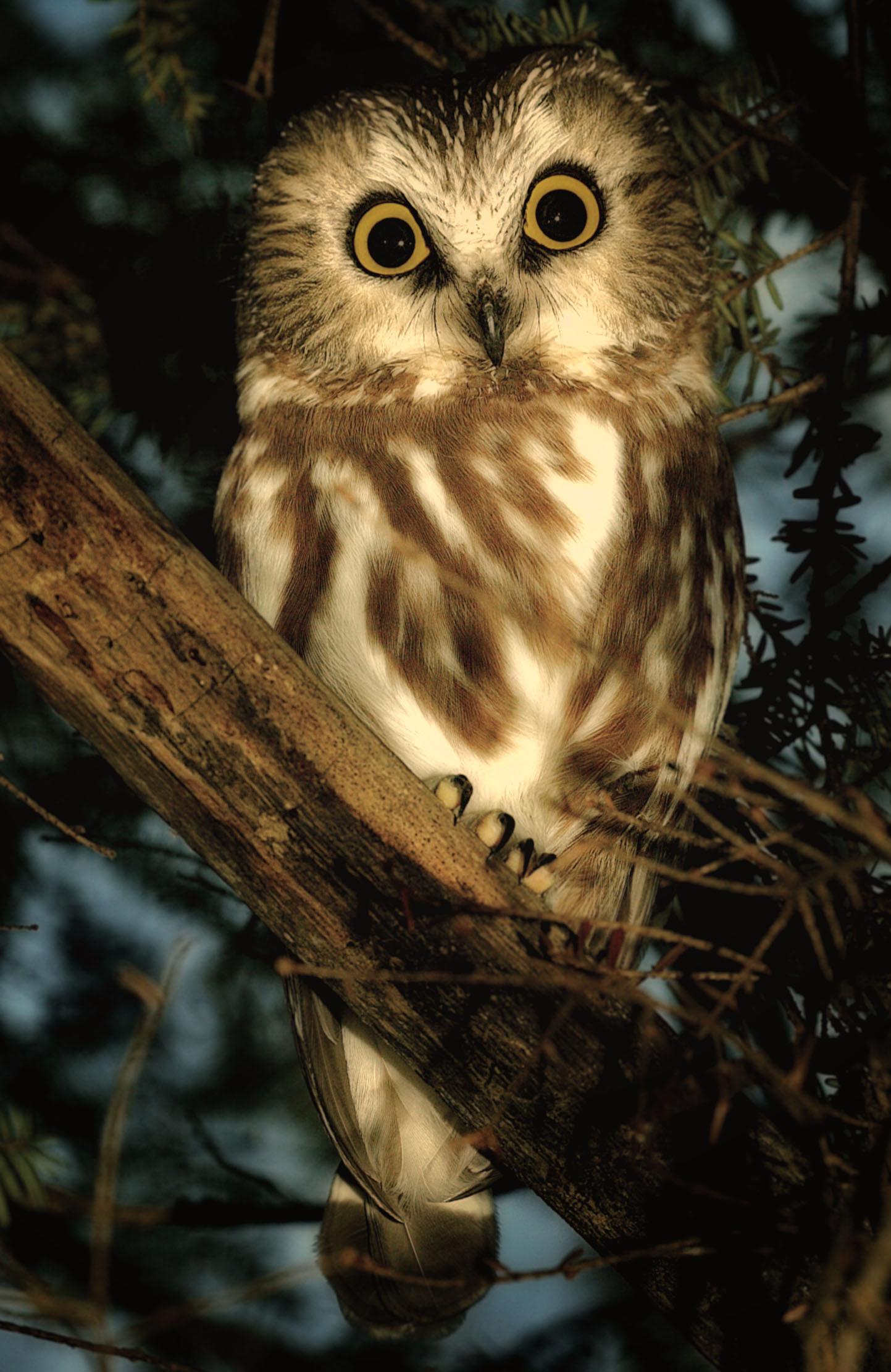Rick Sammon's Bird's ZZ.jpg