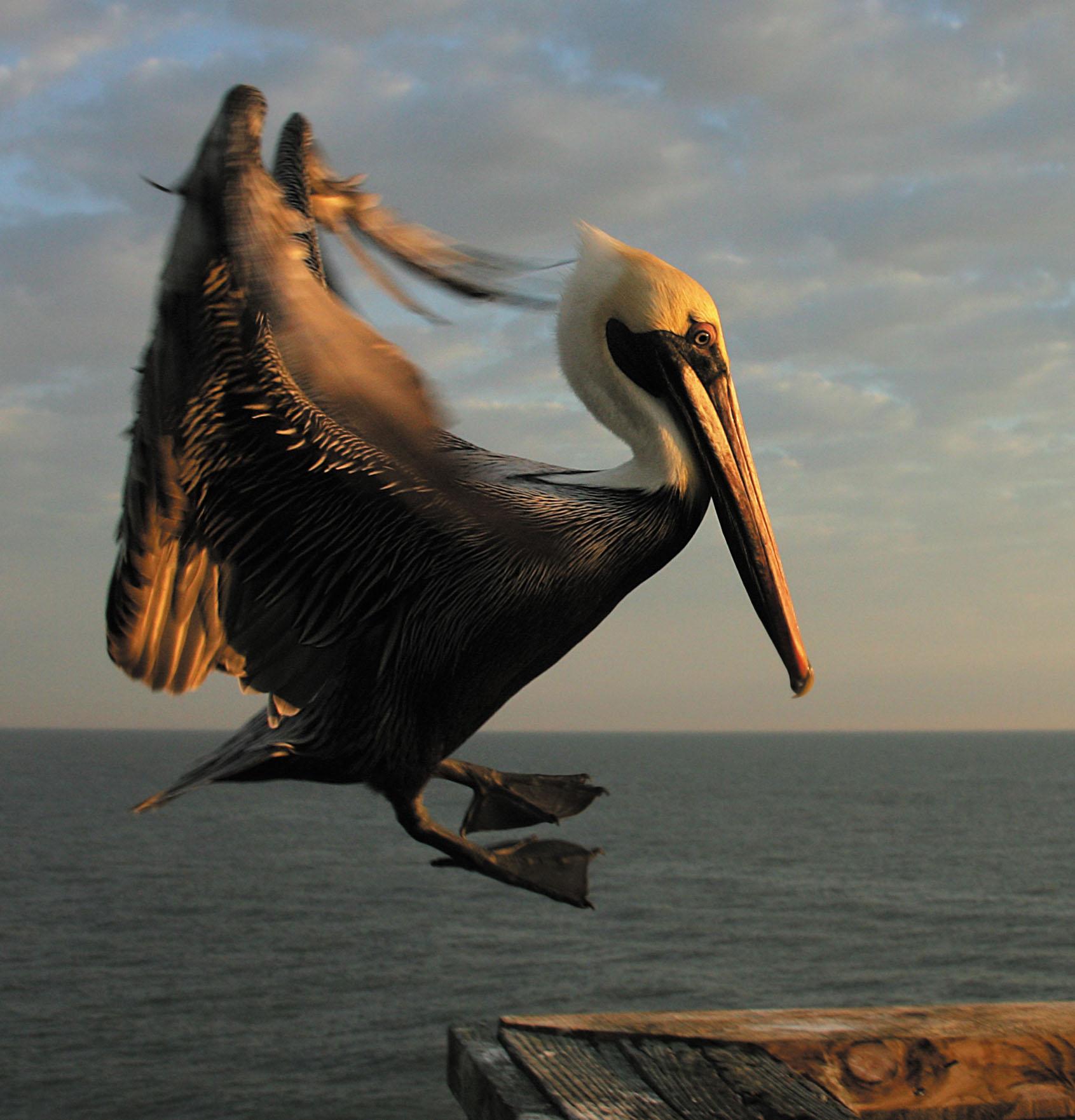 Rick Sammon Birds EE.jpg