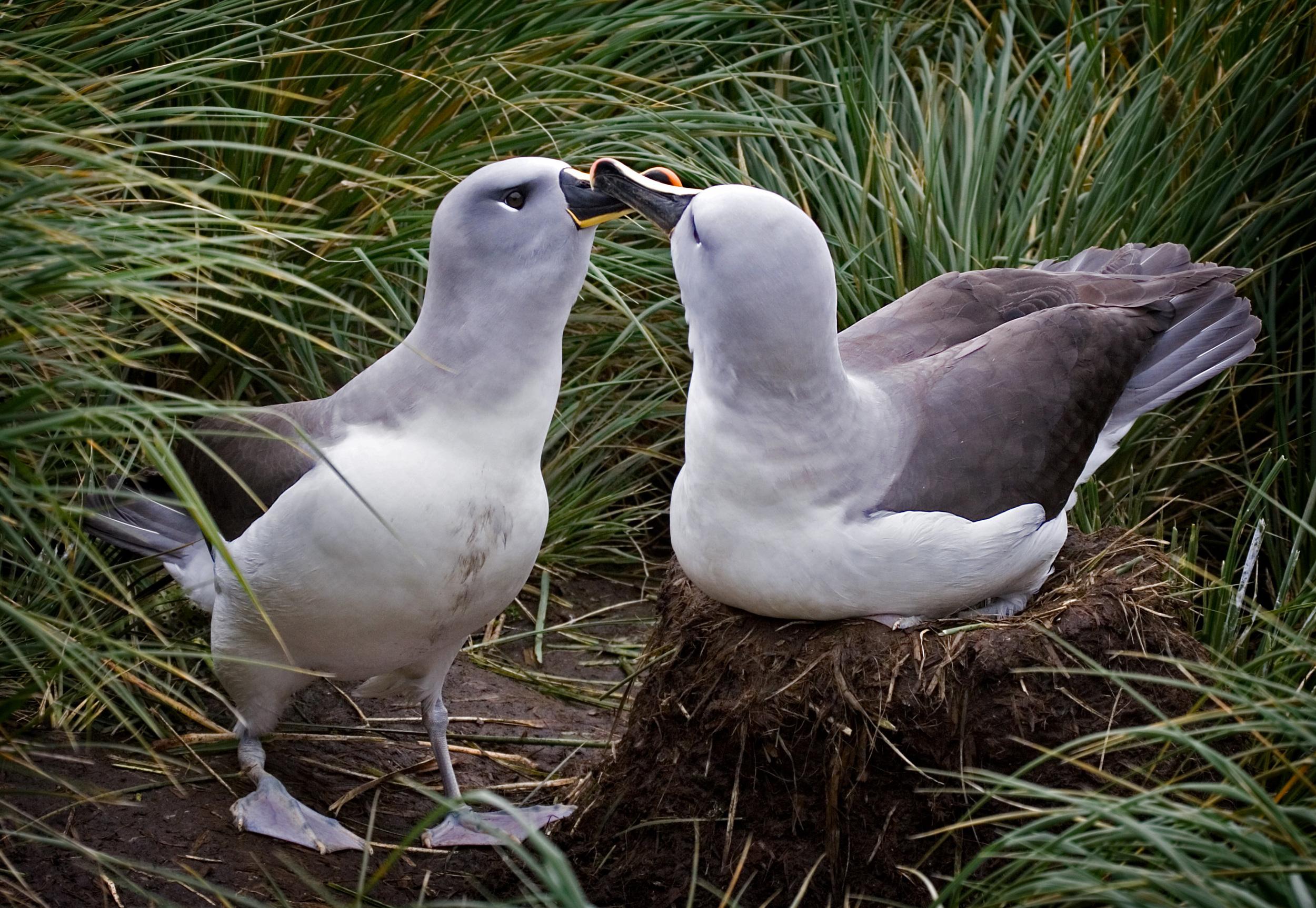 Rick Sammon Birds 97.jpg