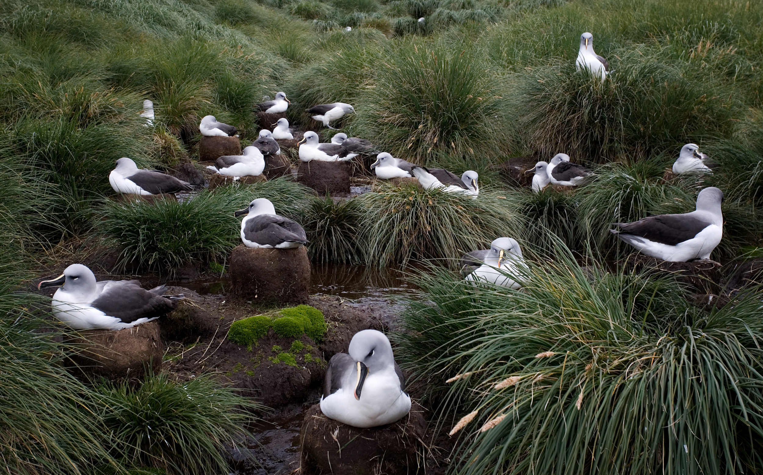 Rick Sammon Birds 96.jpg