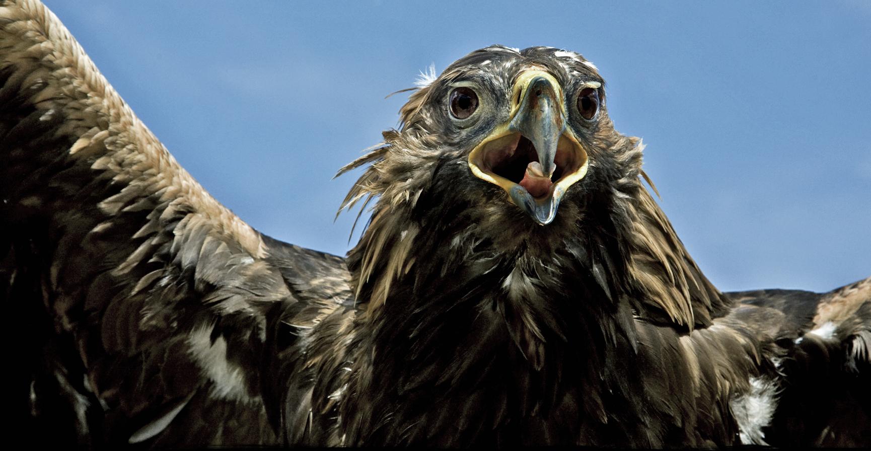 Rick Sammon Birds's 51.jpg