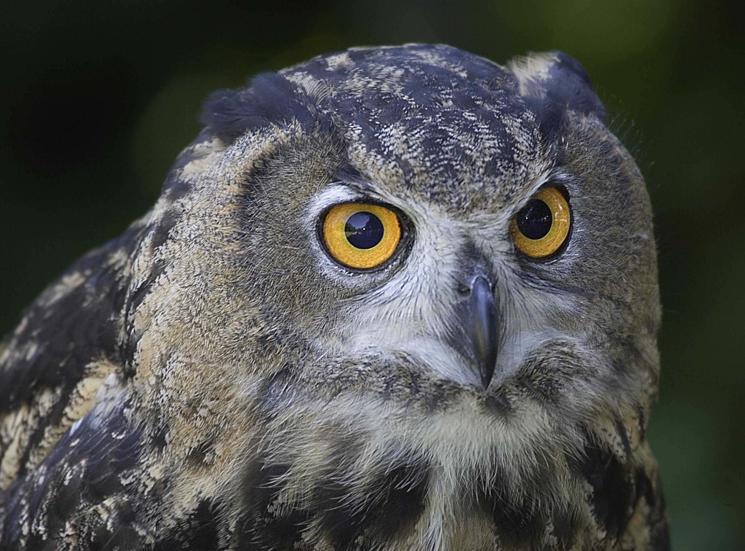 Rick Sammon Birds 53.jpg