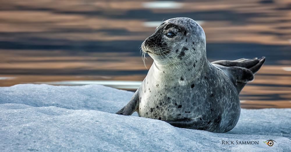 © Rick Sammon Iceland 1.jpg