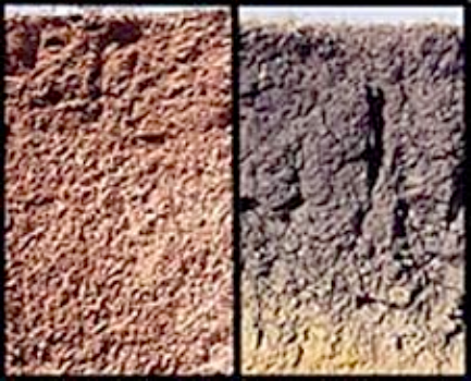 The soil in Arizona, on the left, looks different from the soil from Texas, on the right.