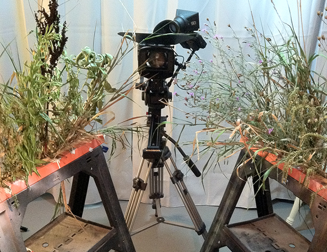 Foreground weeds, camera rig and slider dolly.