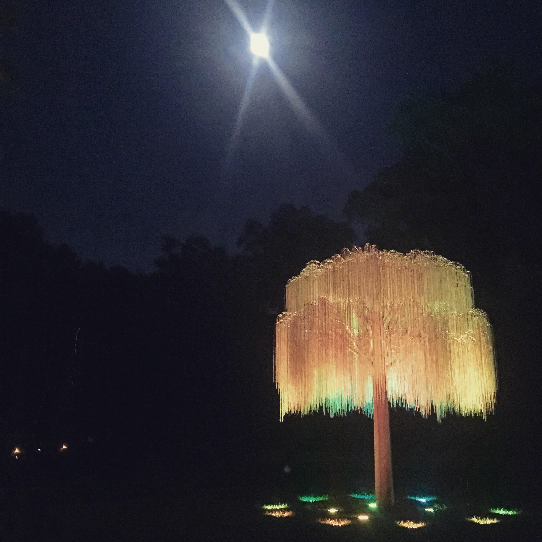 night willow.jpg